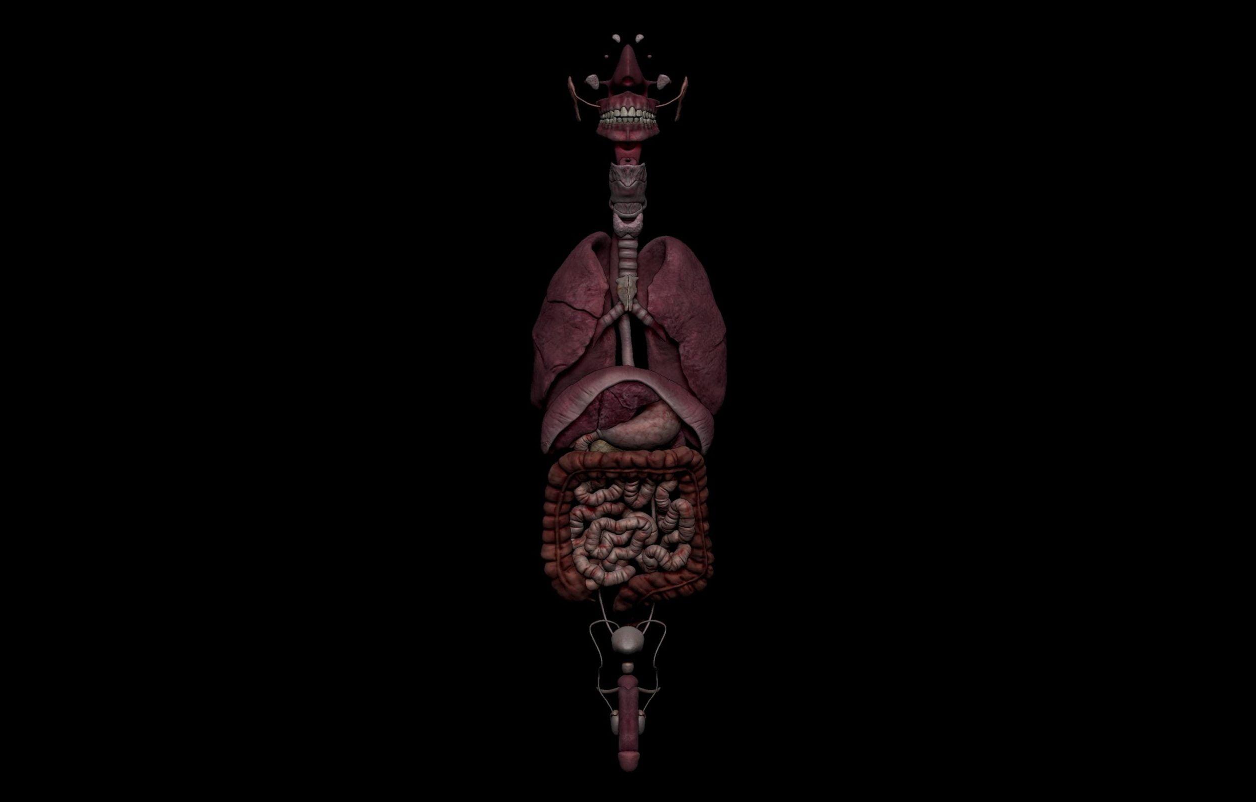 1 6 scaled SA Anatomy | Study Anatomy in 3D