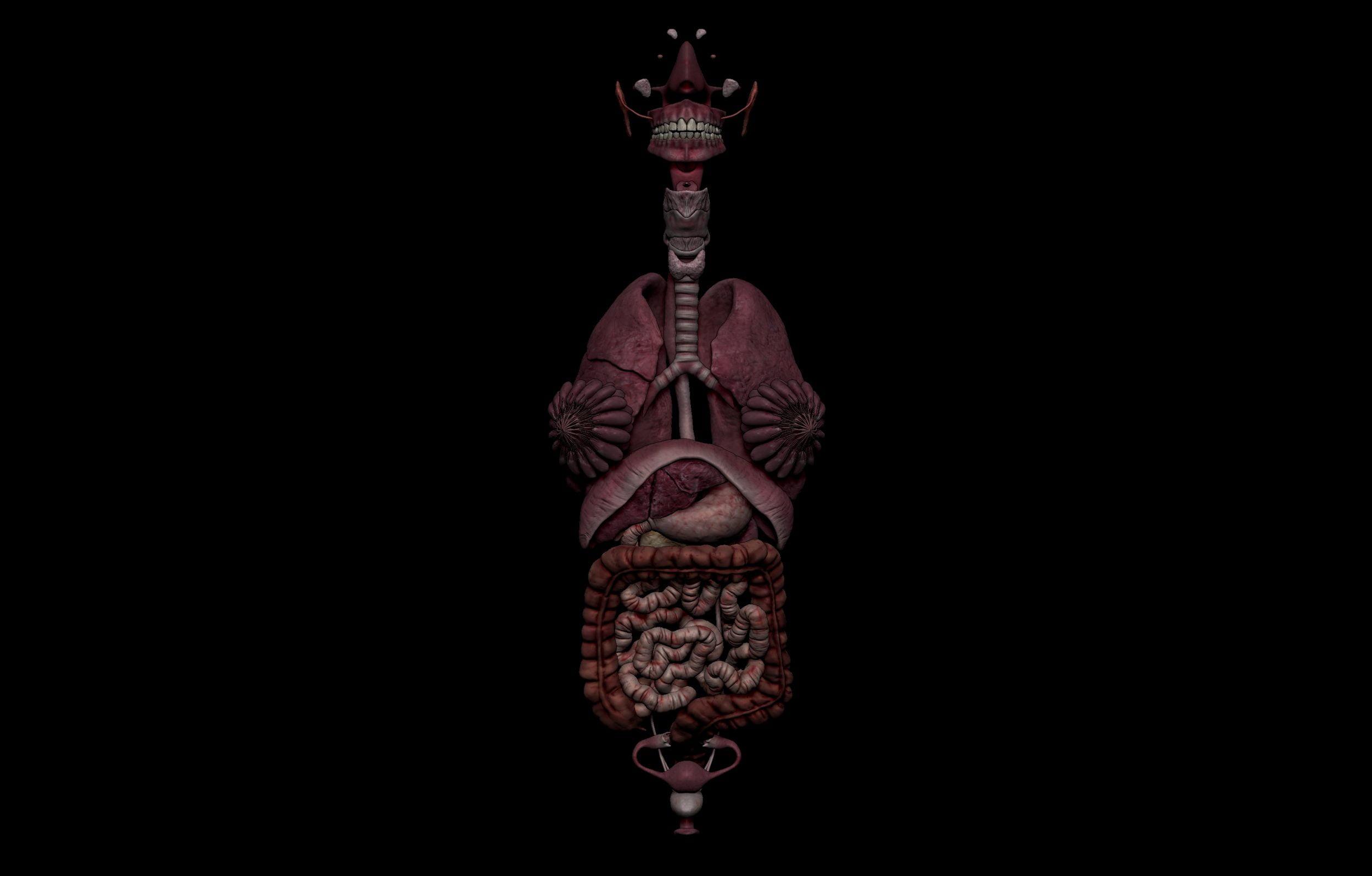 1 7 scaled SA Anatomy | Study Anatomy in 3D