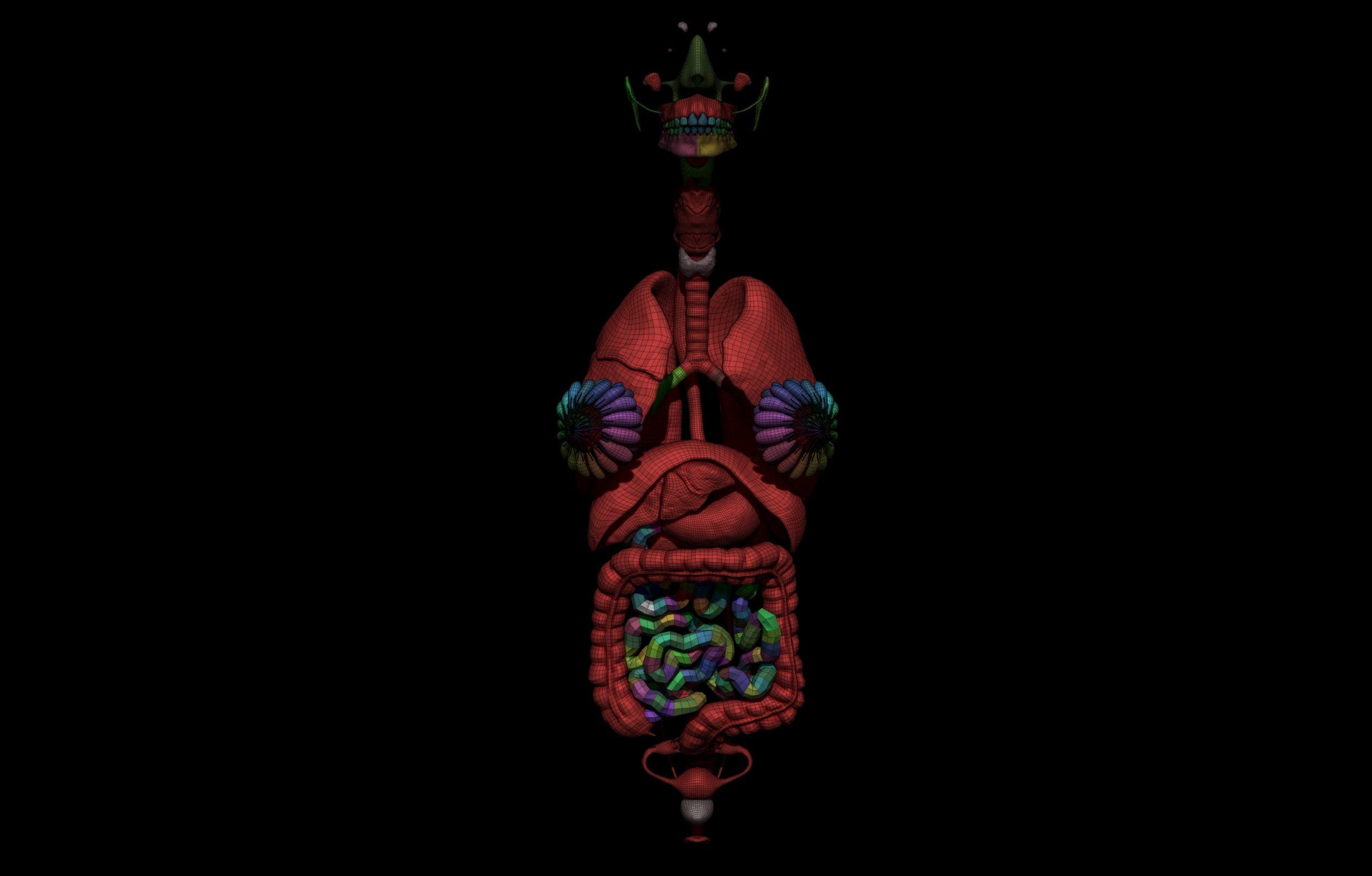 13 2 scaled SA Anatomy | Study Anatomy in 3D
