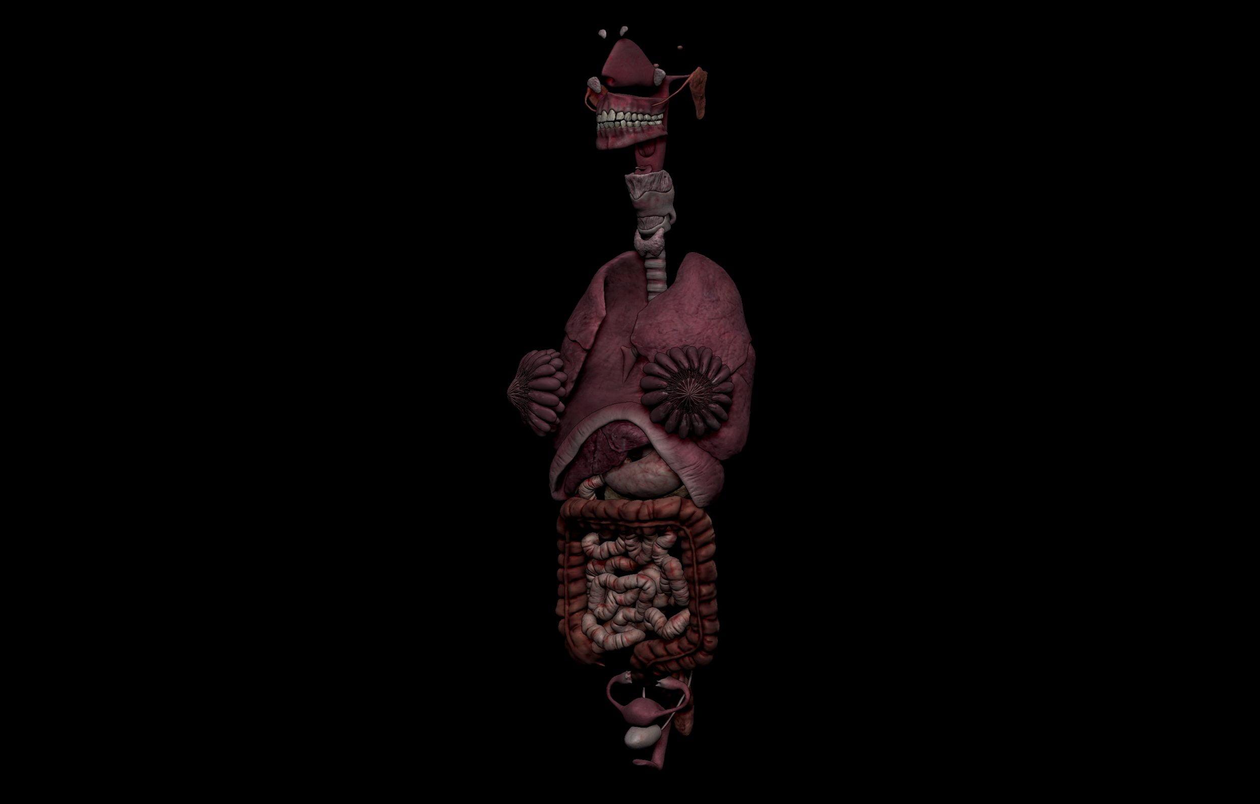 2 5 scaled SA Anatomy | Study Anatomy in 3D