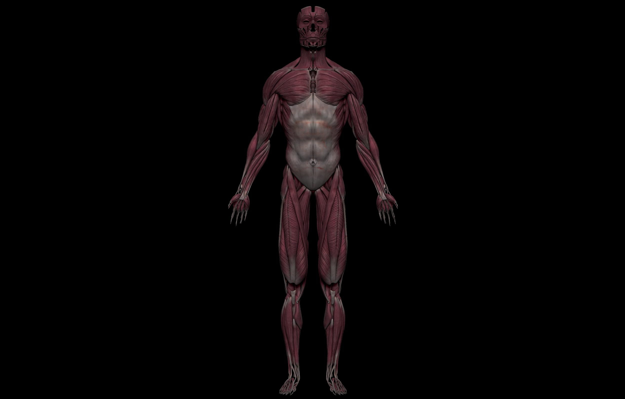 1 4 scaled SA Anatomy   Study Anatomy in 3D