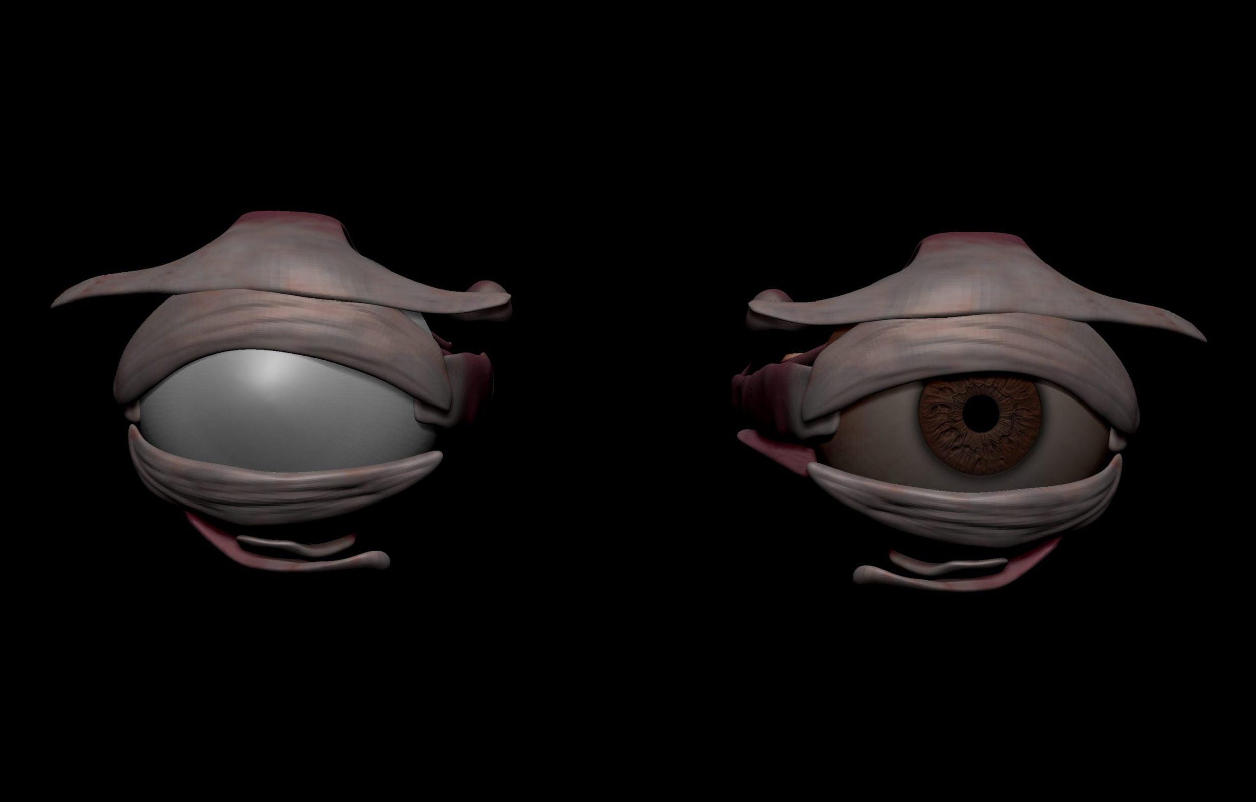 Eye anatomy