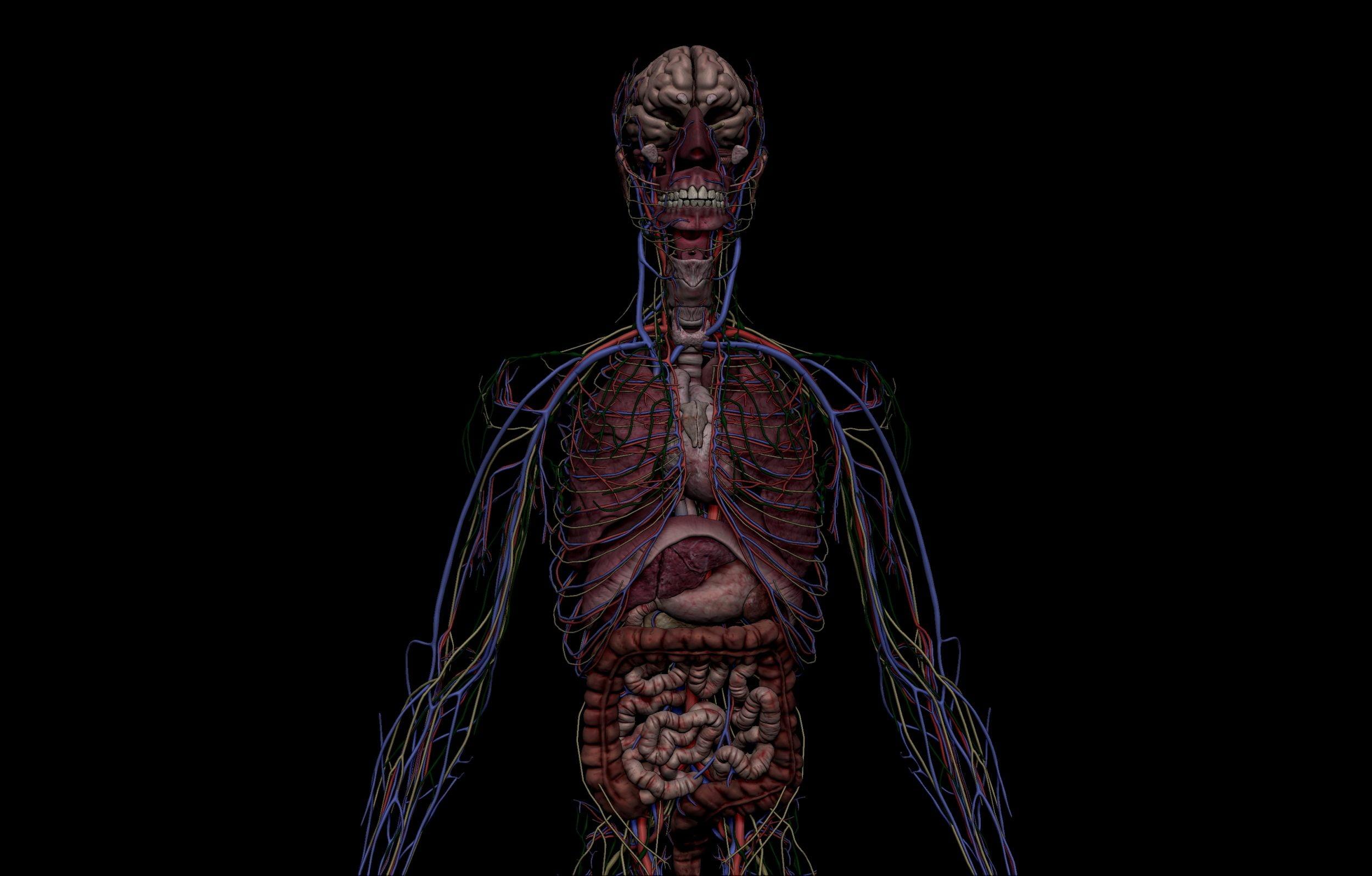 10 1 scaled SA Anatomy   Study Anatomy in 3D