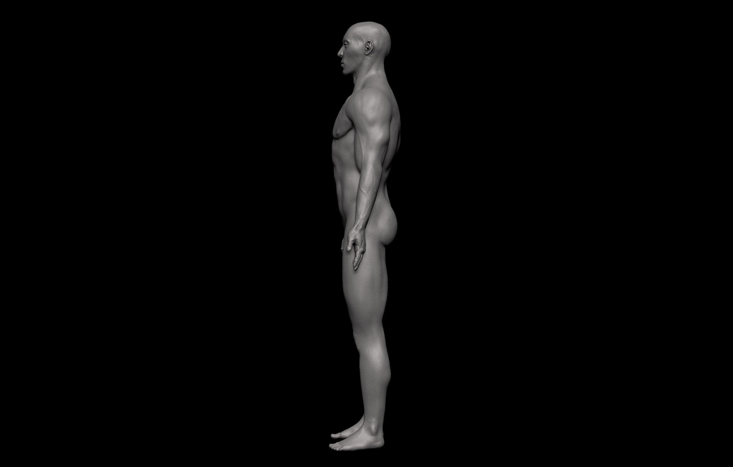 10 2 scaled SA Anatomy | Study Anatomy in 3D