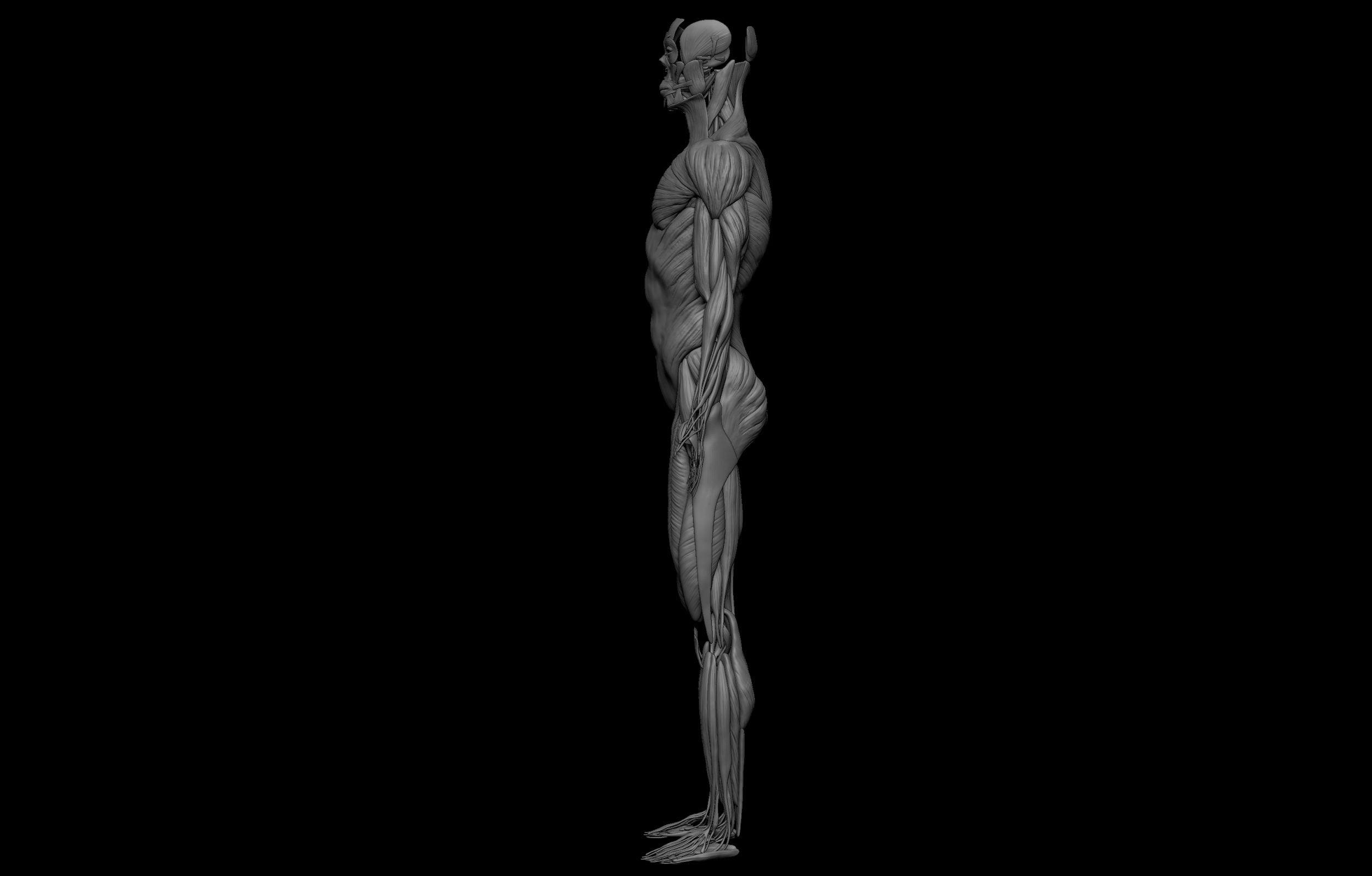 10 3 scaled SA Anatomy   Study Anatomy in 3D