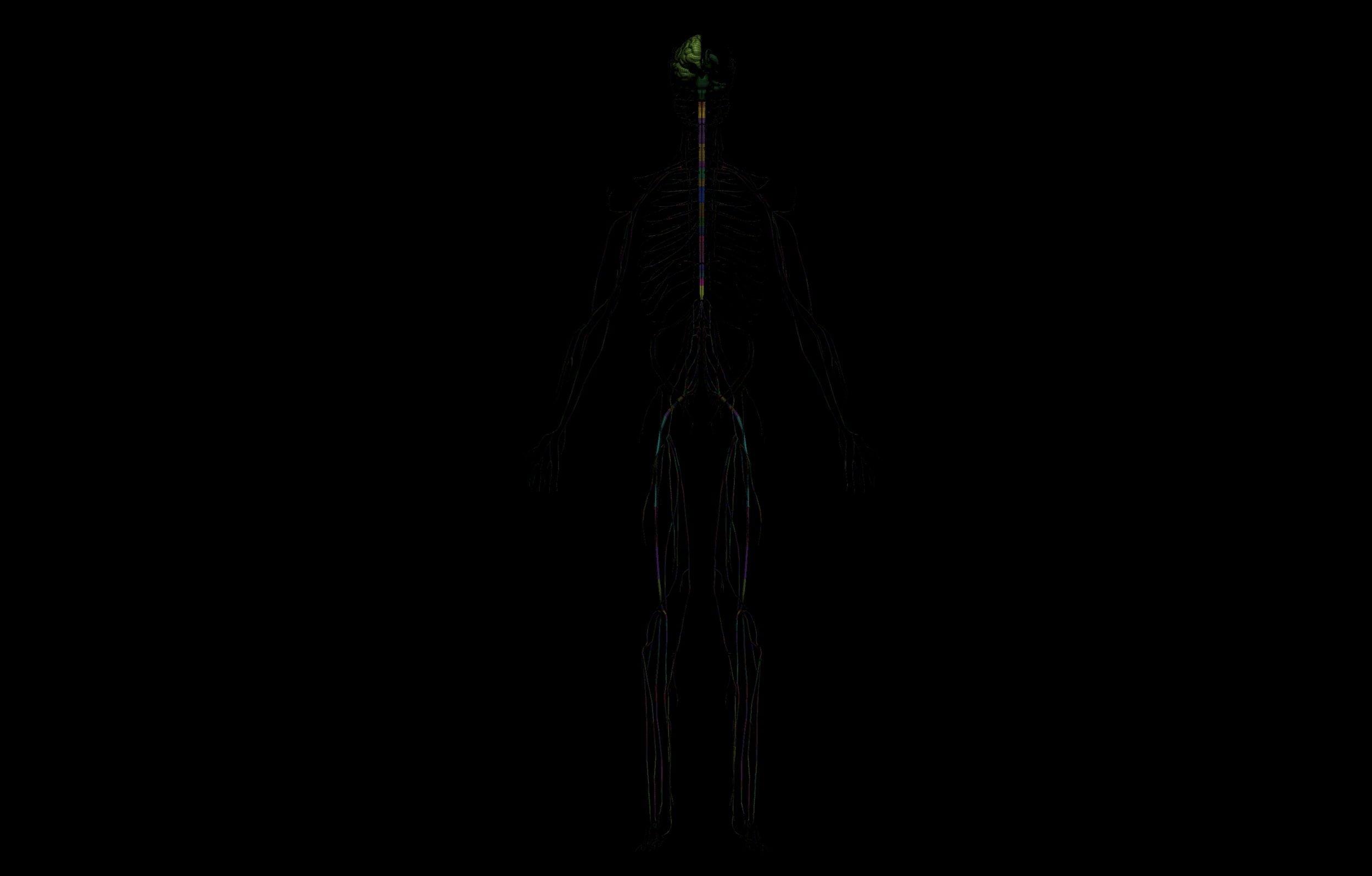 10 5 scaled SA Anatomy | Study Anatomy in 3D