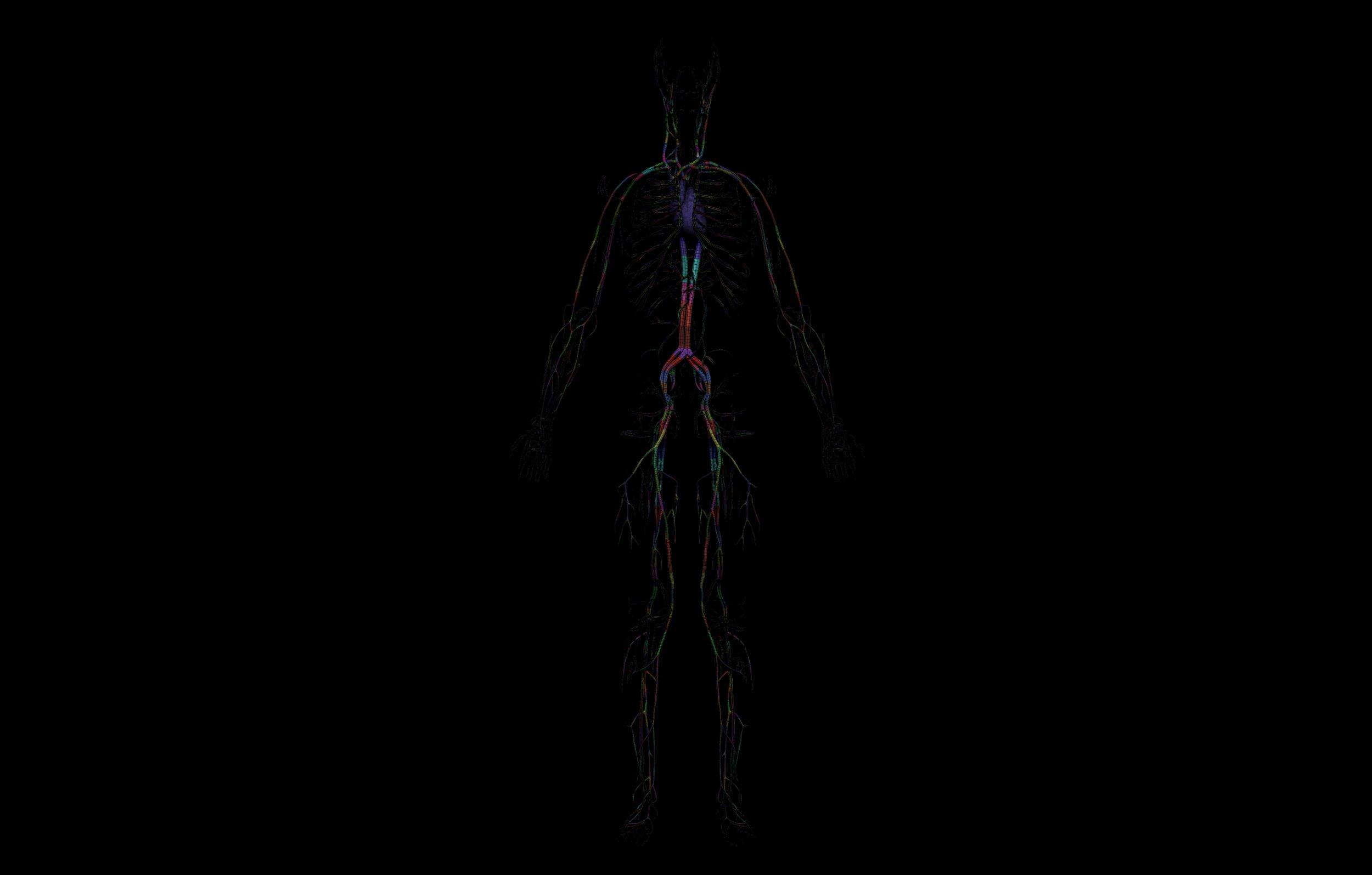 11 1 scaled SA Anatomy | Study Anatomy in 3D