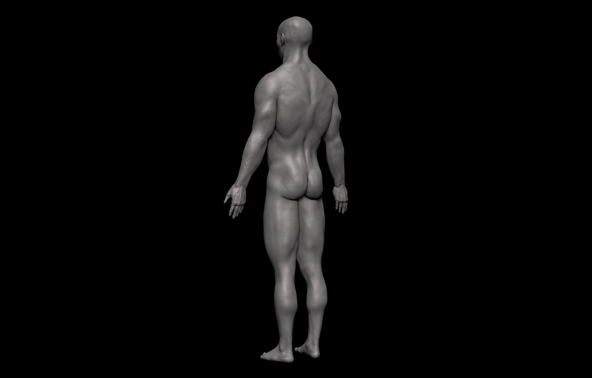 11 2 scaled SA Anatomy | Study Anatomy in 3D