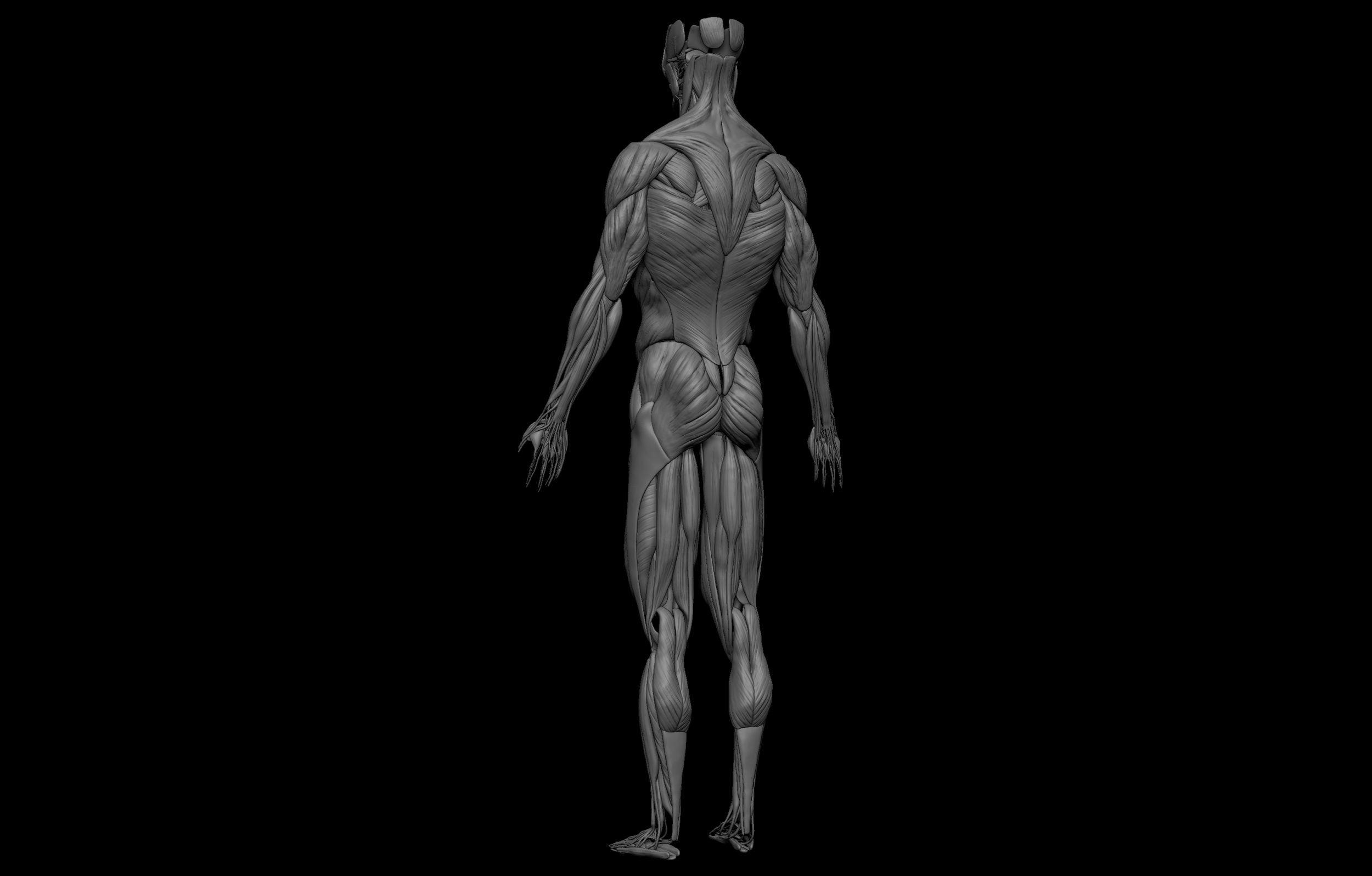11 3 scaled SA Anatomy   Study Anatomy in 3D
