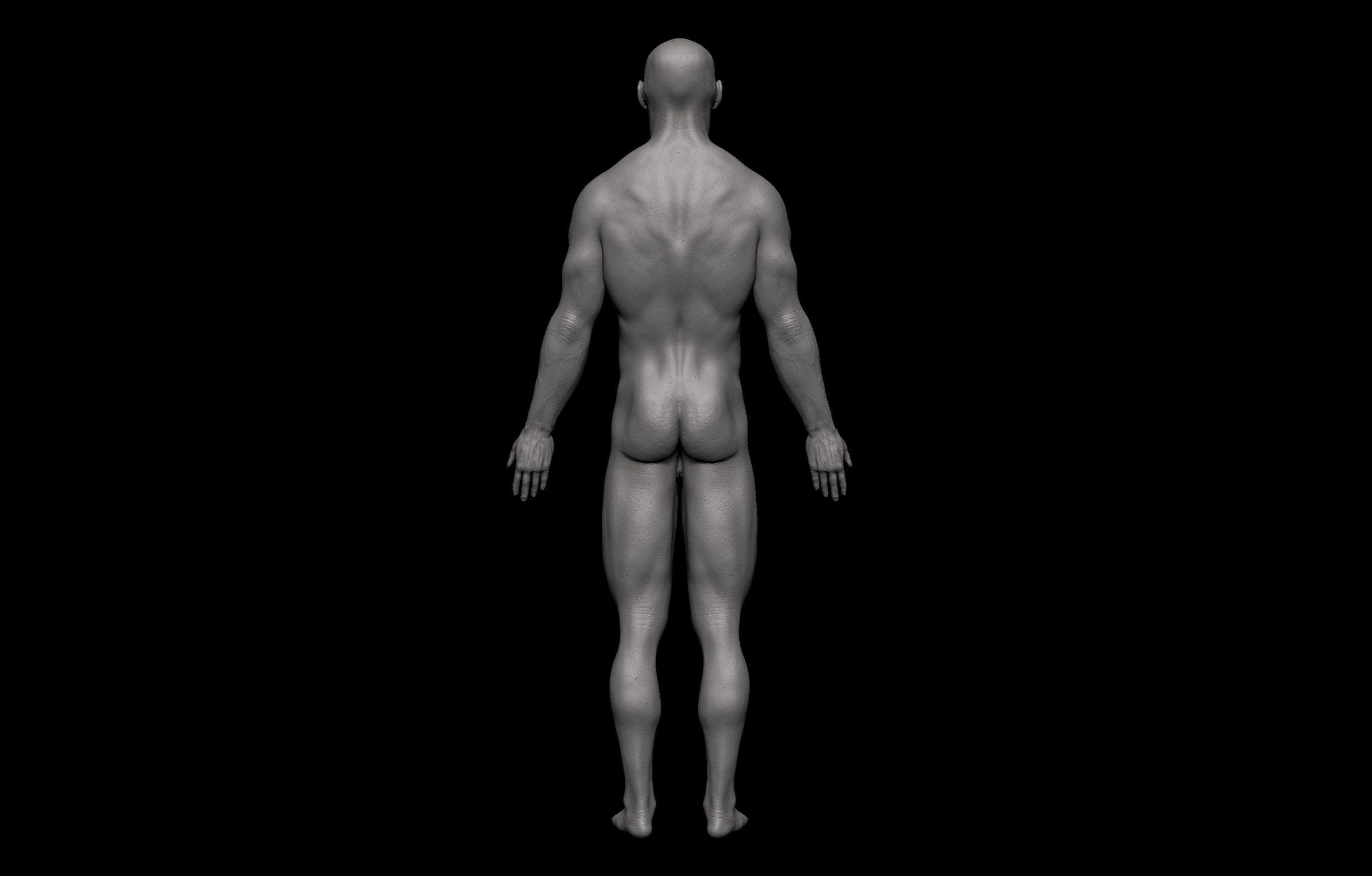 12 2 scaled SA Anatomy | Study Anatomy in 3D