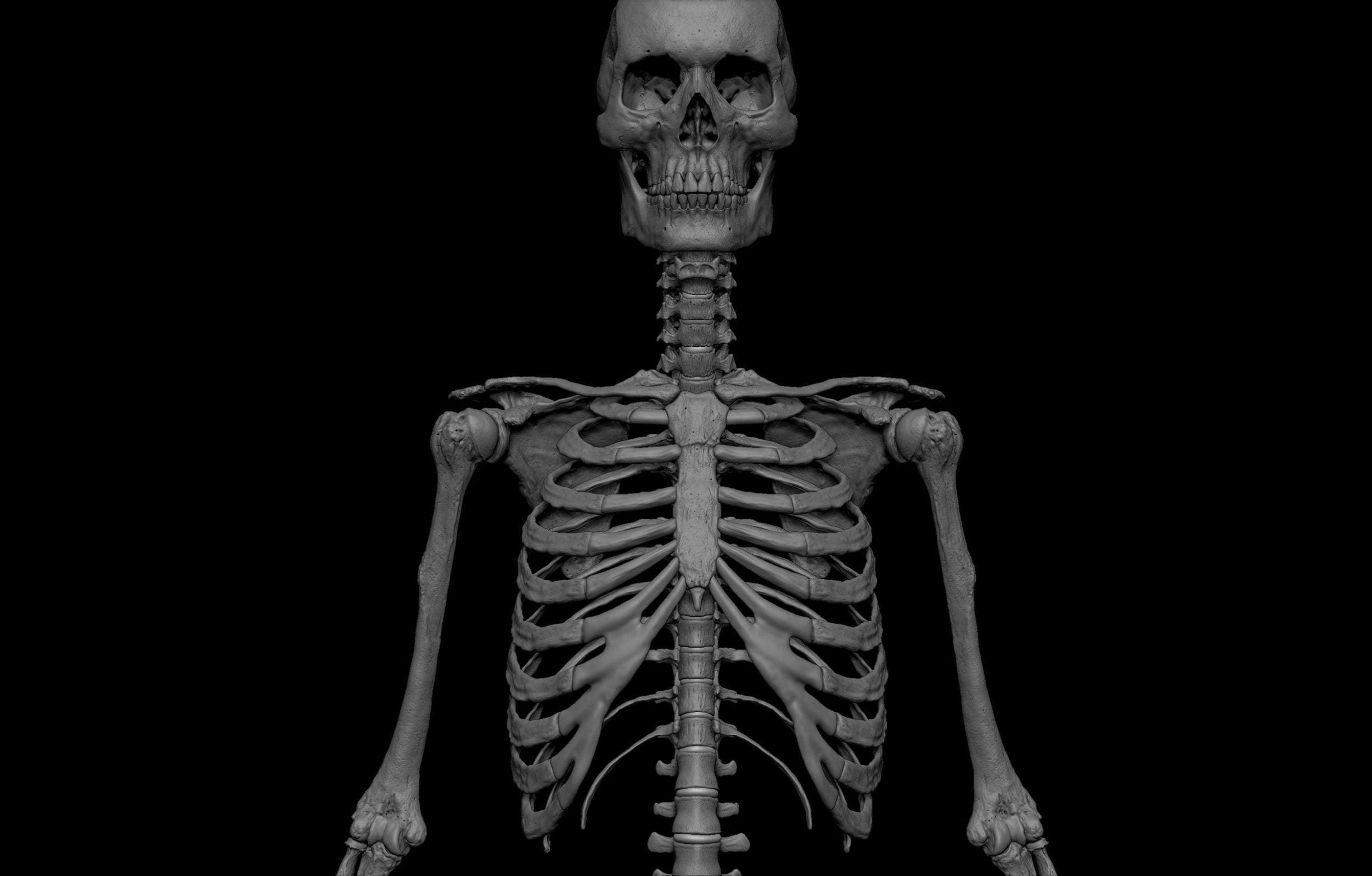 12 4 scaled SA Anatomy | Study Anatomy in 3D