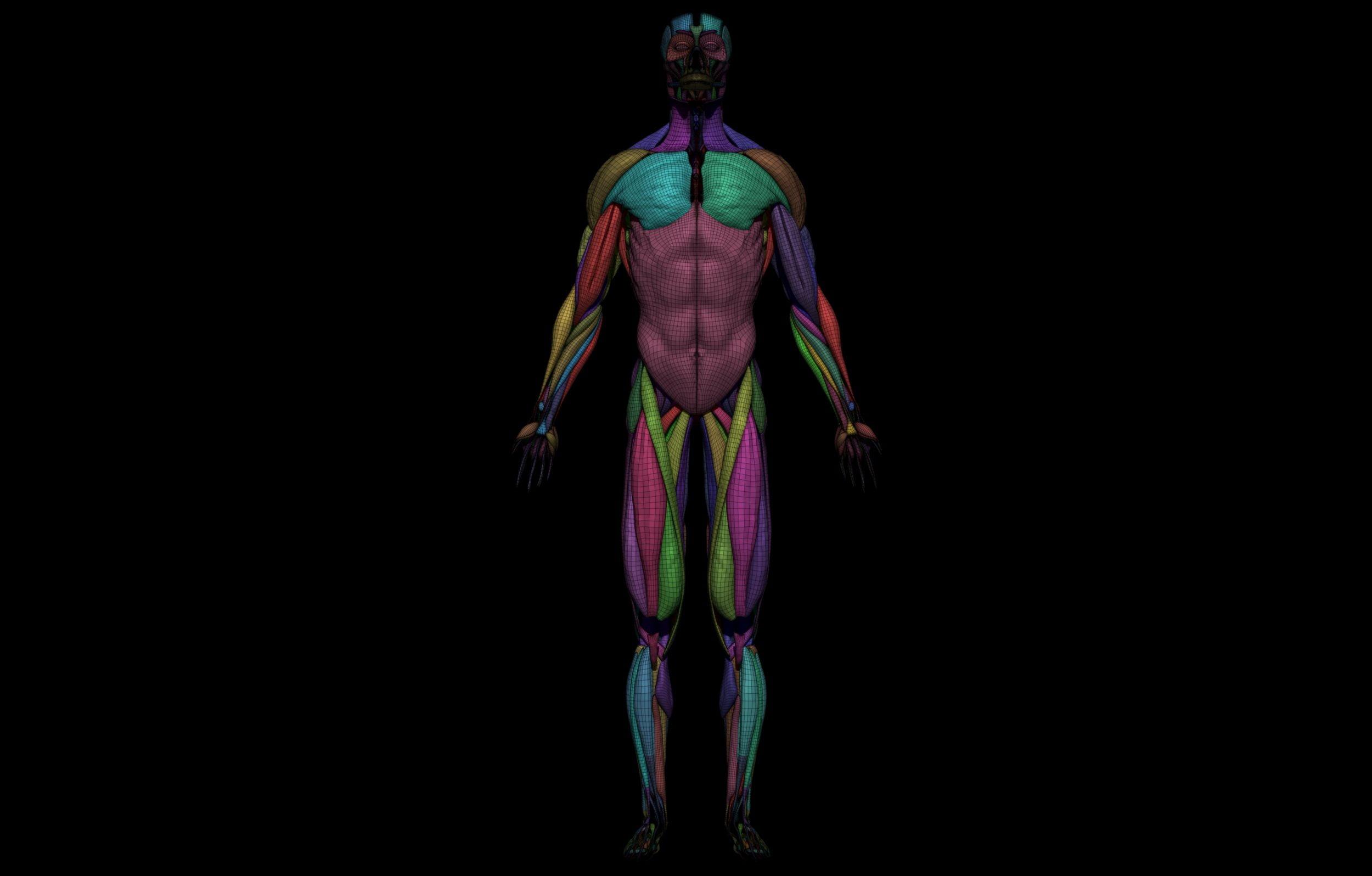 13 3 scaled SA Anatomy   Study Anatomy in 3D