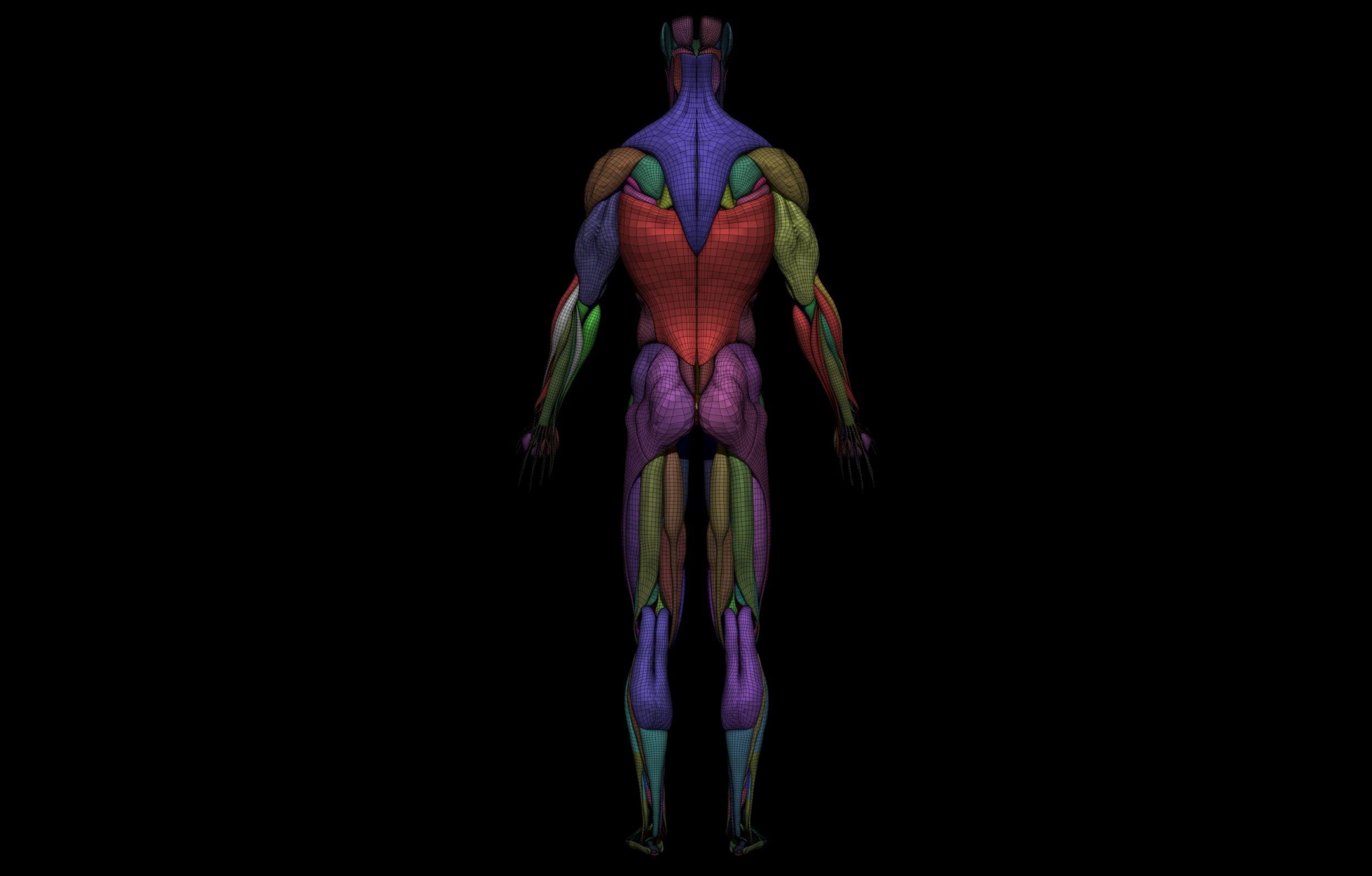 14 2 scaled SA Anatomy   Study Anatomy in 3D