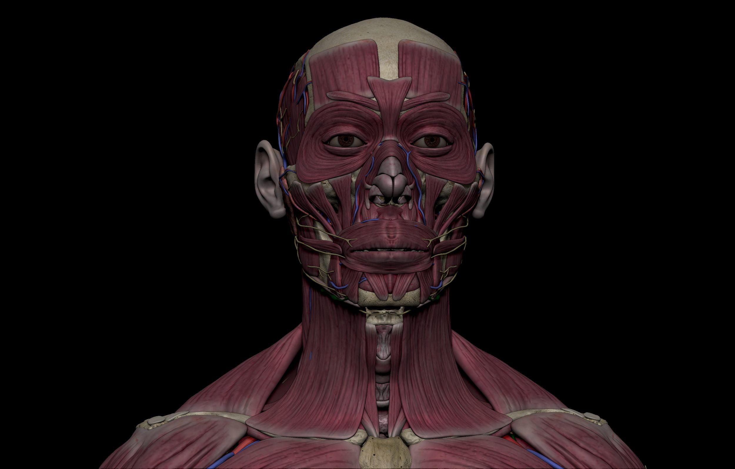 14 scaled SA Anatomy   Study Anatomy in 3D