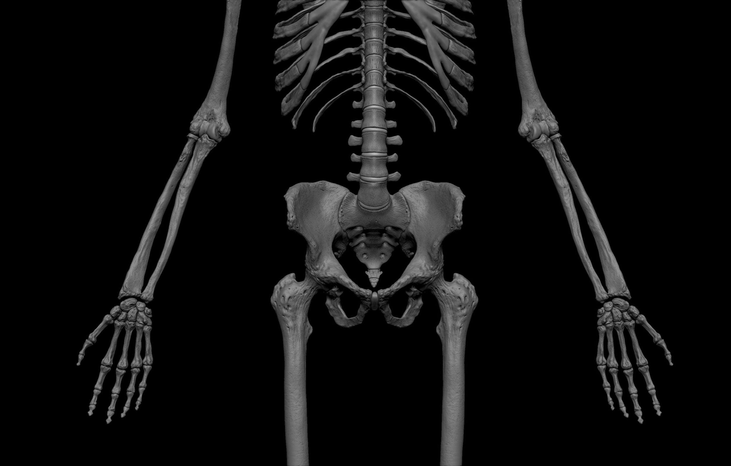14 3 scaled SA Anatomy | Study Anatomy in 3D