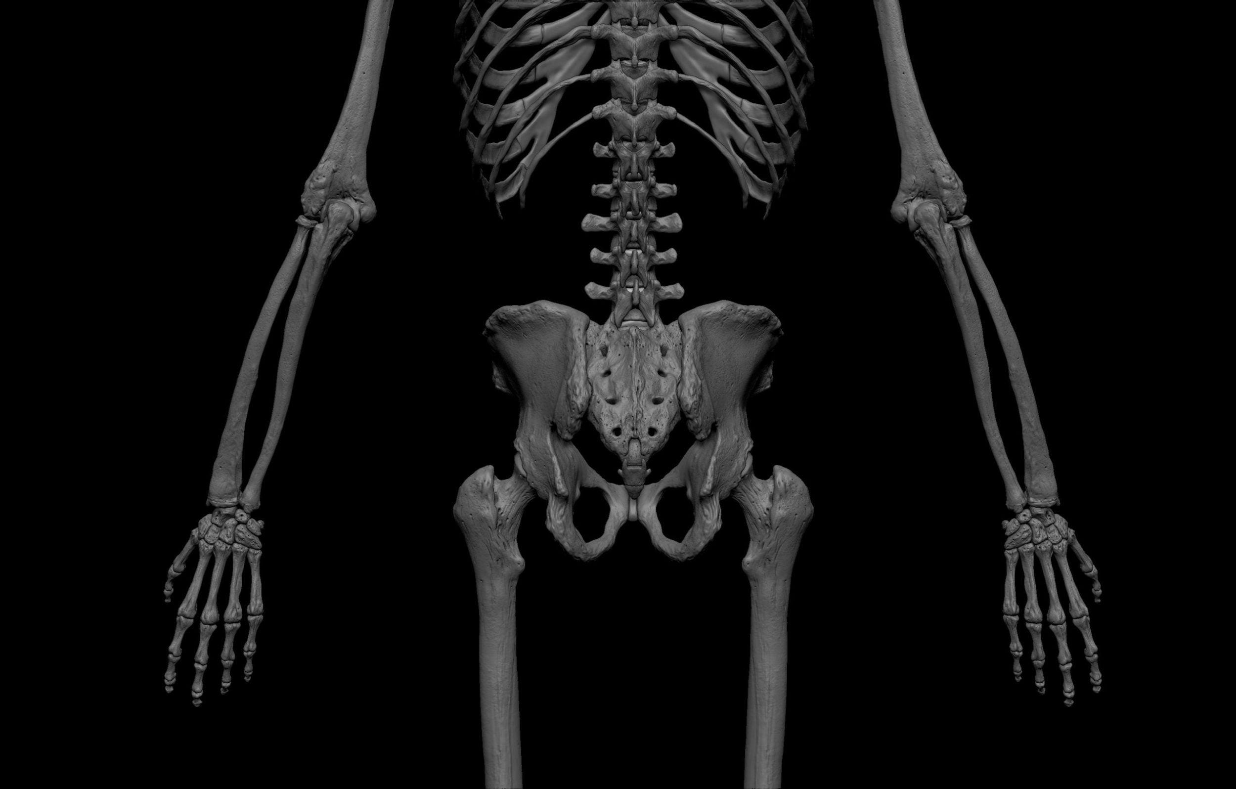 15 2 scaled SA Anatomy | Study Anatomy in 3D