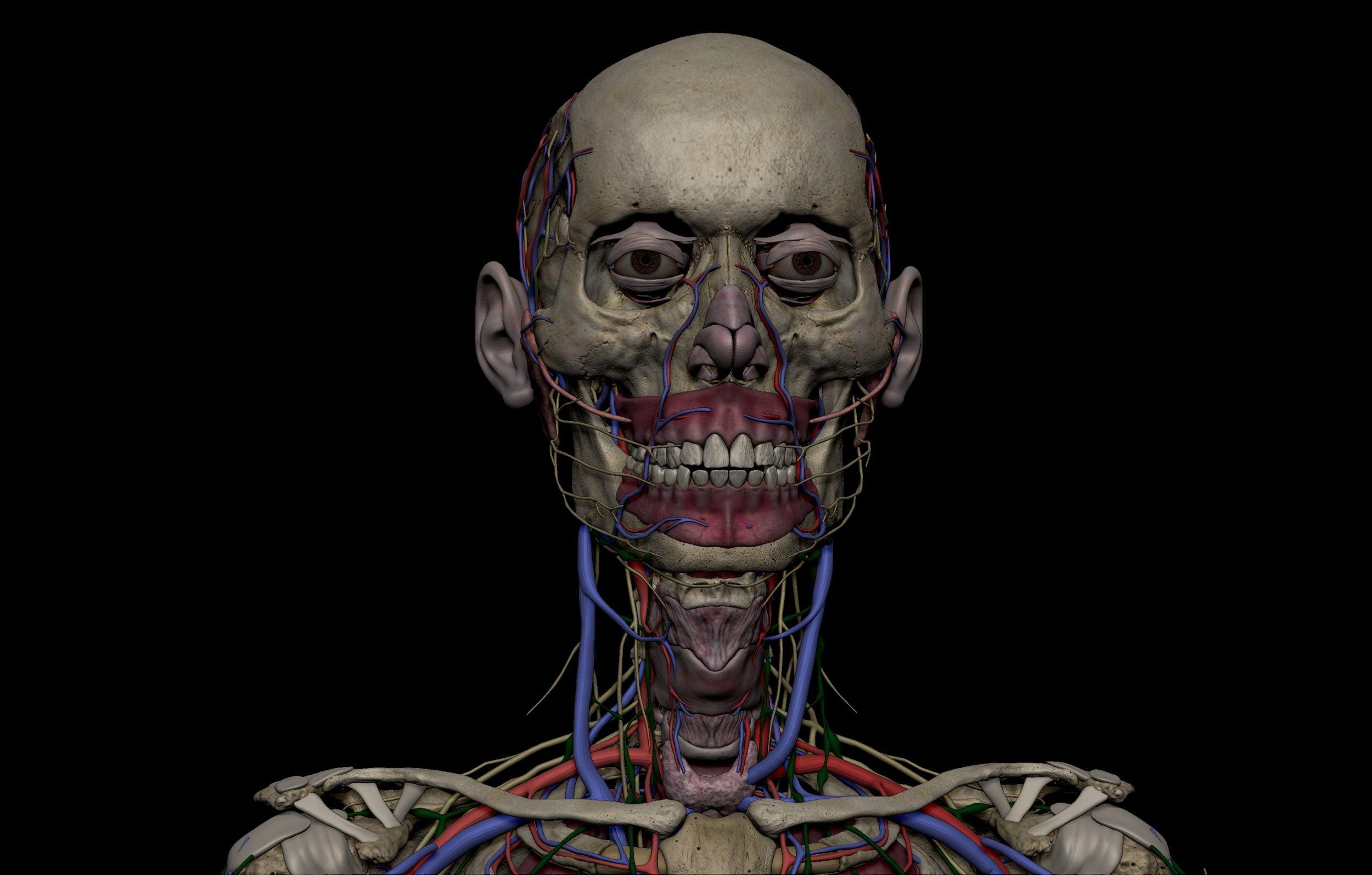 15 scaled SA Anatomy   Study Anatomy in 3D
