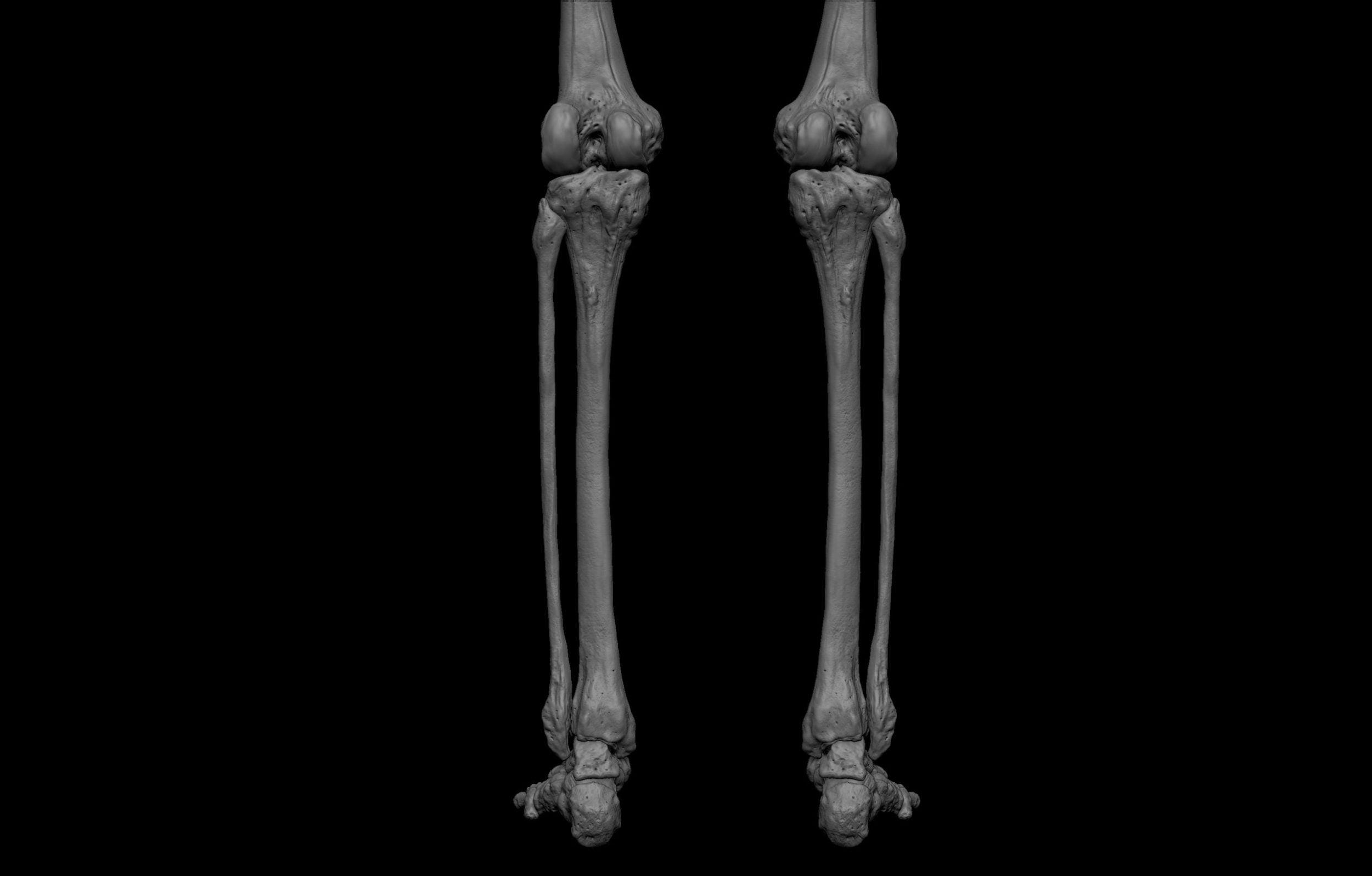 16 2 scaled SA Anatomy | Study Anatomy in 3D