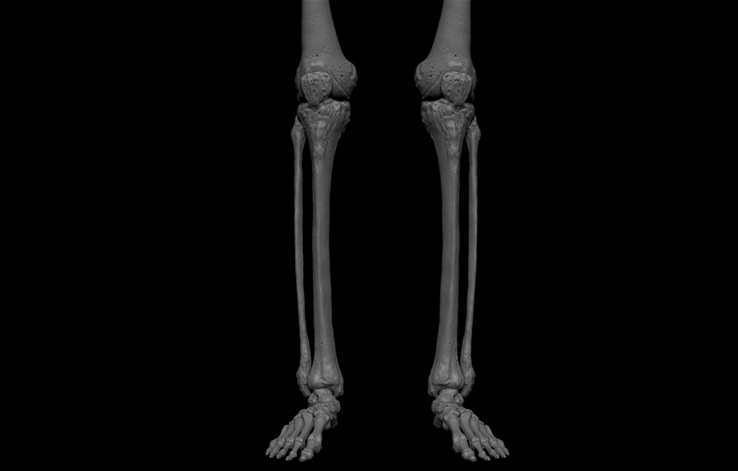 17 2 scaled SA Anatomy | Study Anatomy in 3D