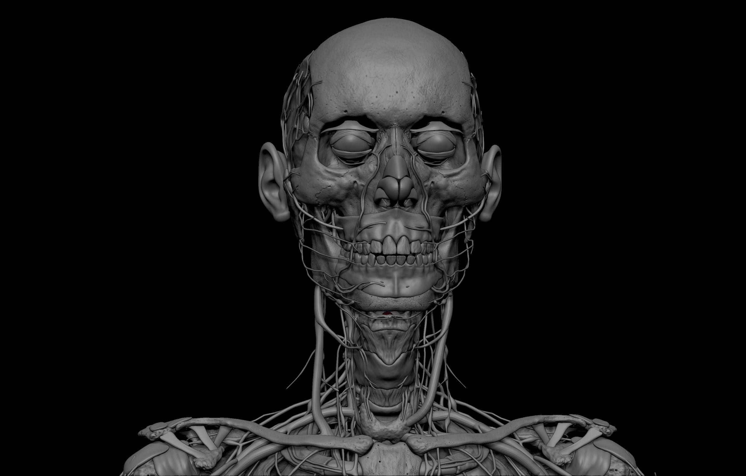 17 scaled SA Anatomy   Study Anatomy in 3D