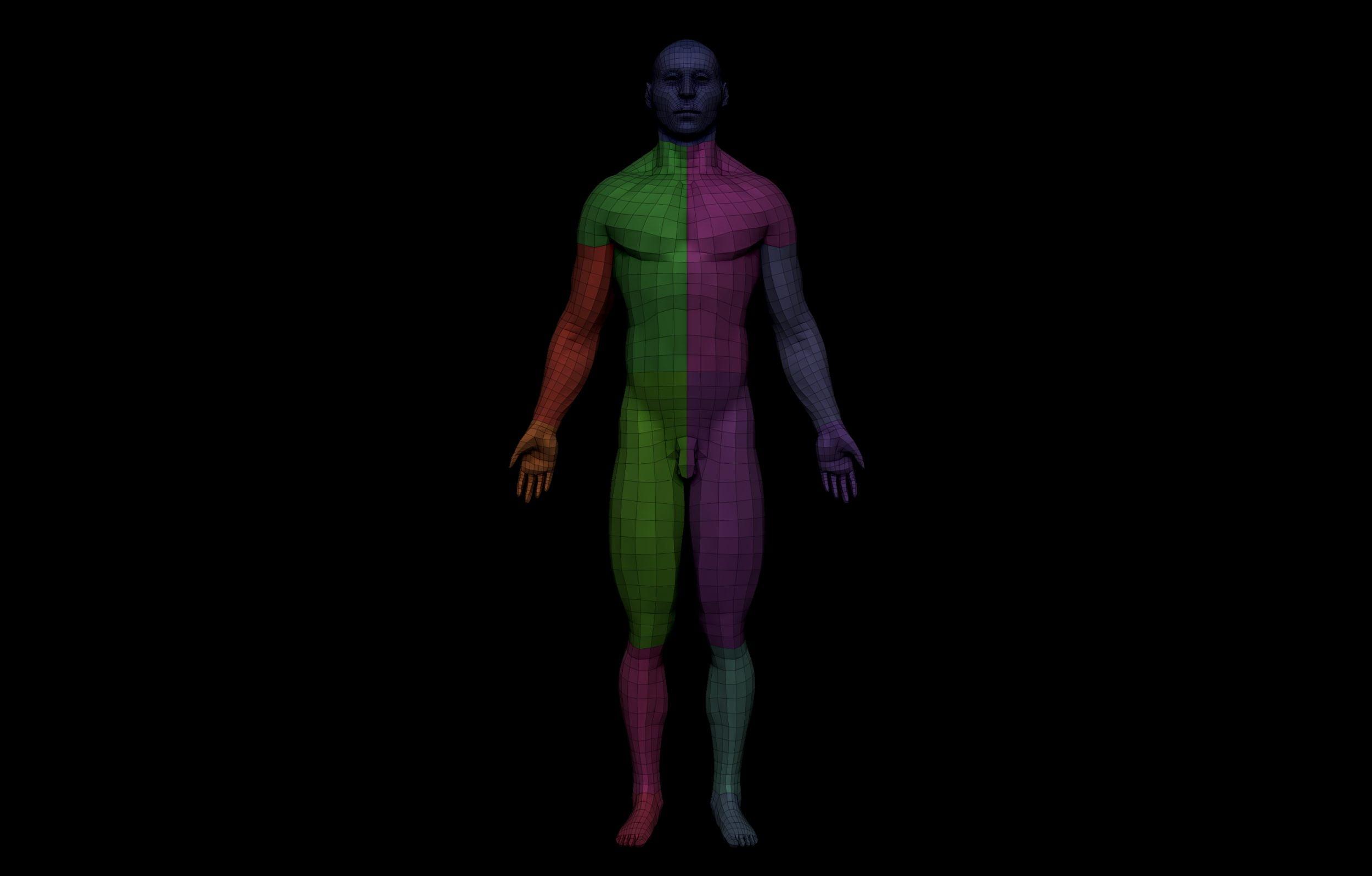 18 1 scaled SA Anatomy | Study Anatomy in 3D