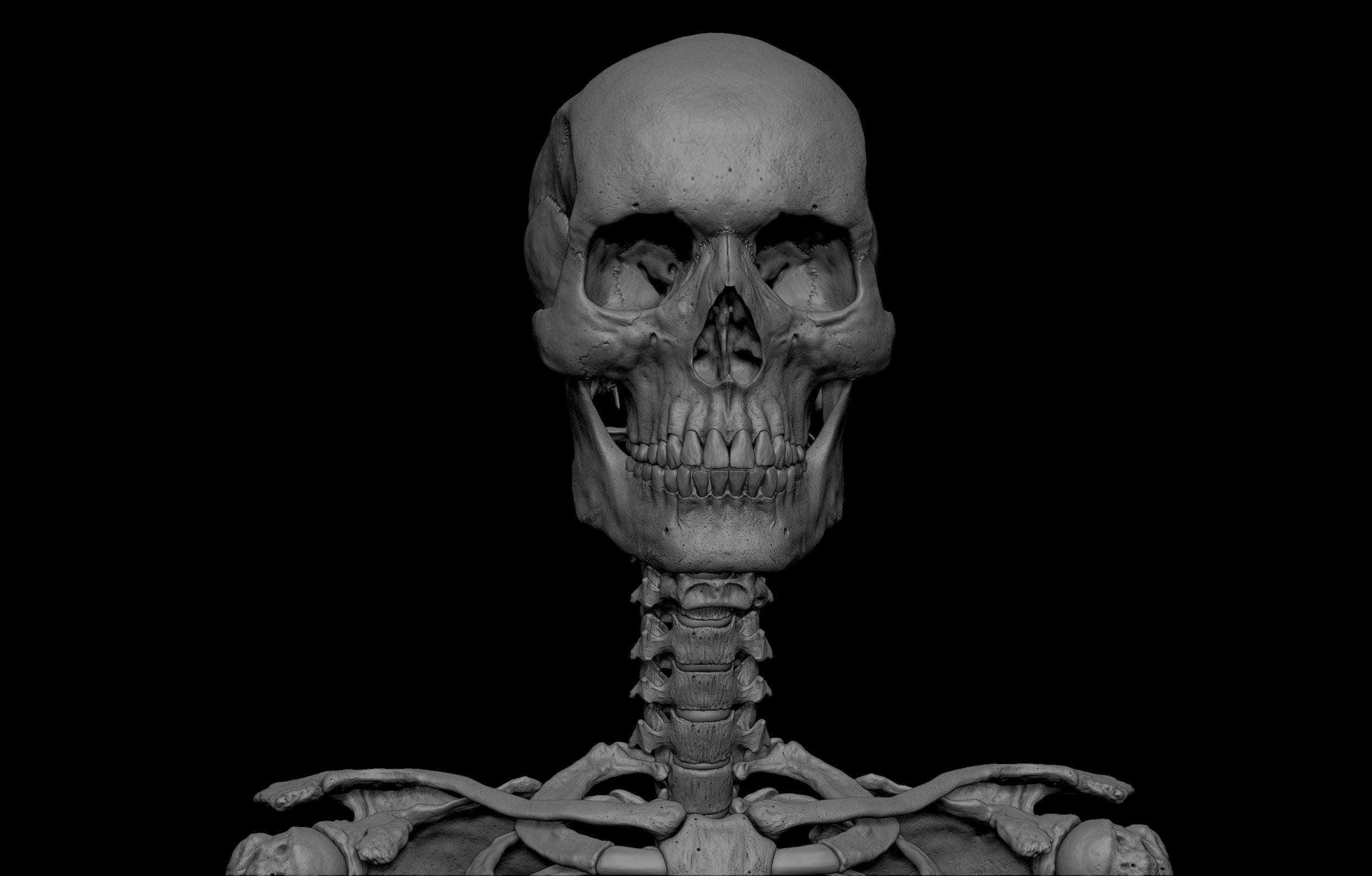 18 scaled SA Anatomy   Study Anatomy in 3D