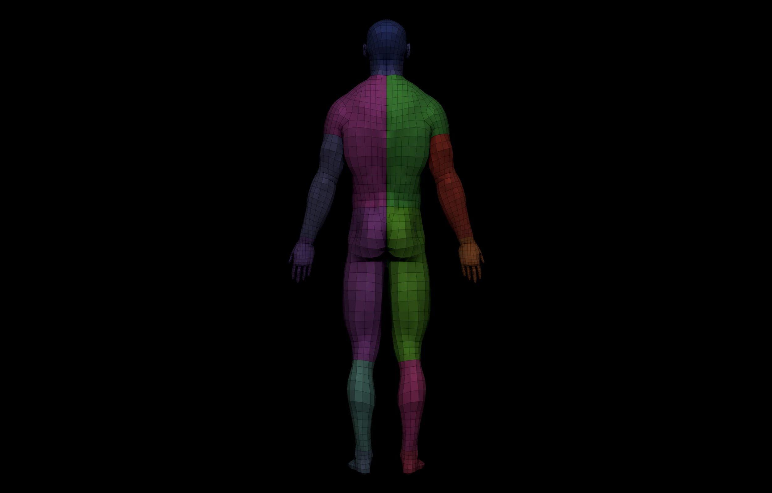 19 scaled SA Anatomy | Study Anatomy in 3D