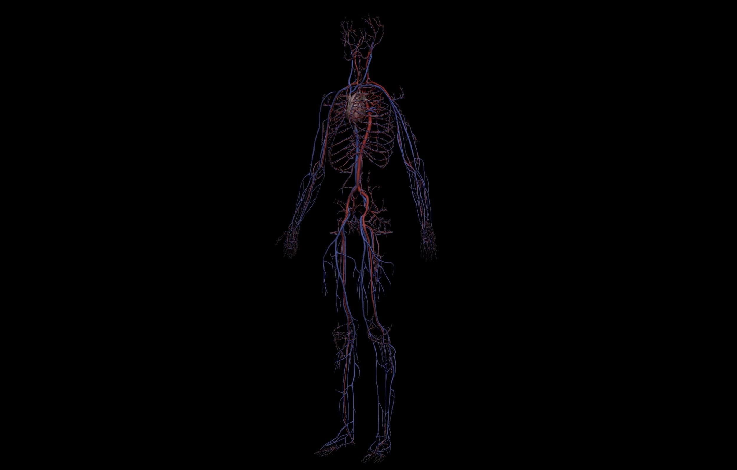 2 scaled SA Anatomy | Study Anatomy in 3D