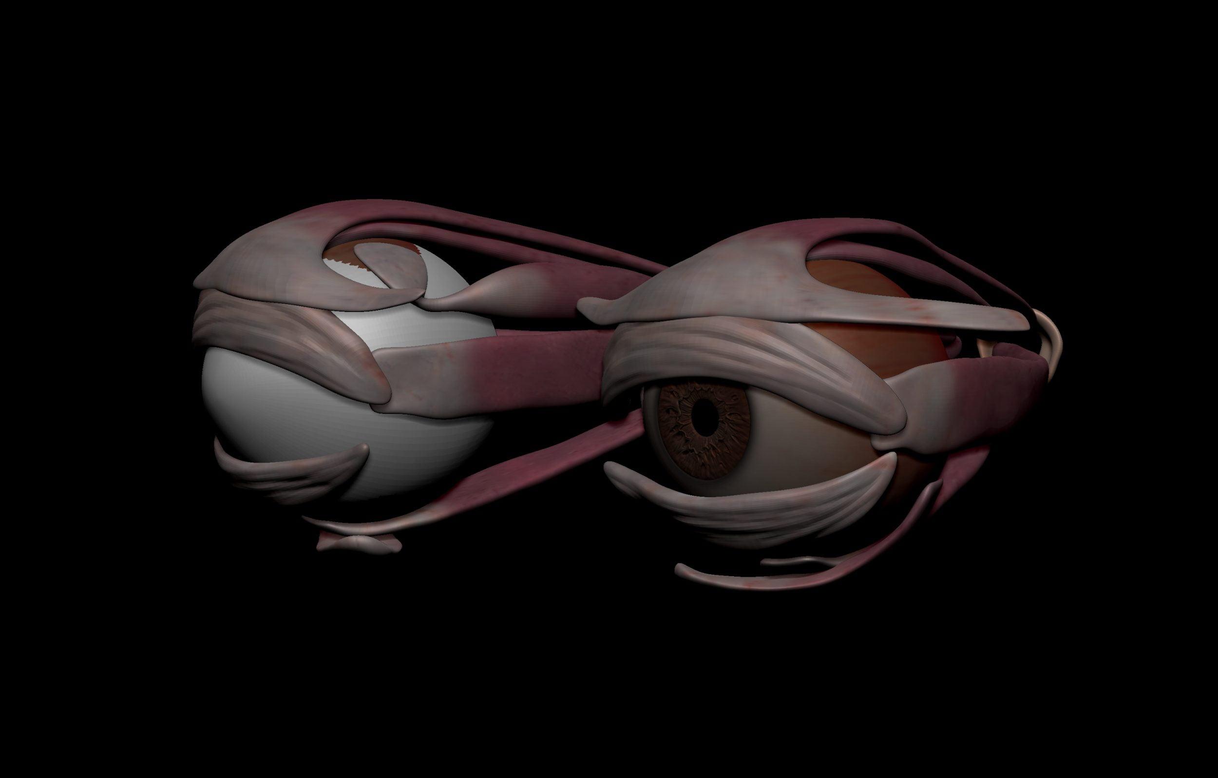 2 6 scaled SA Anatomy | Study Anatomy in 3D