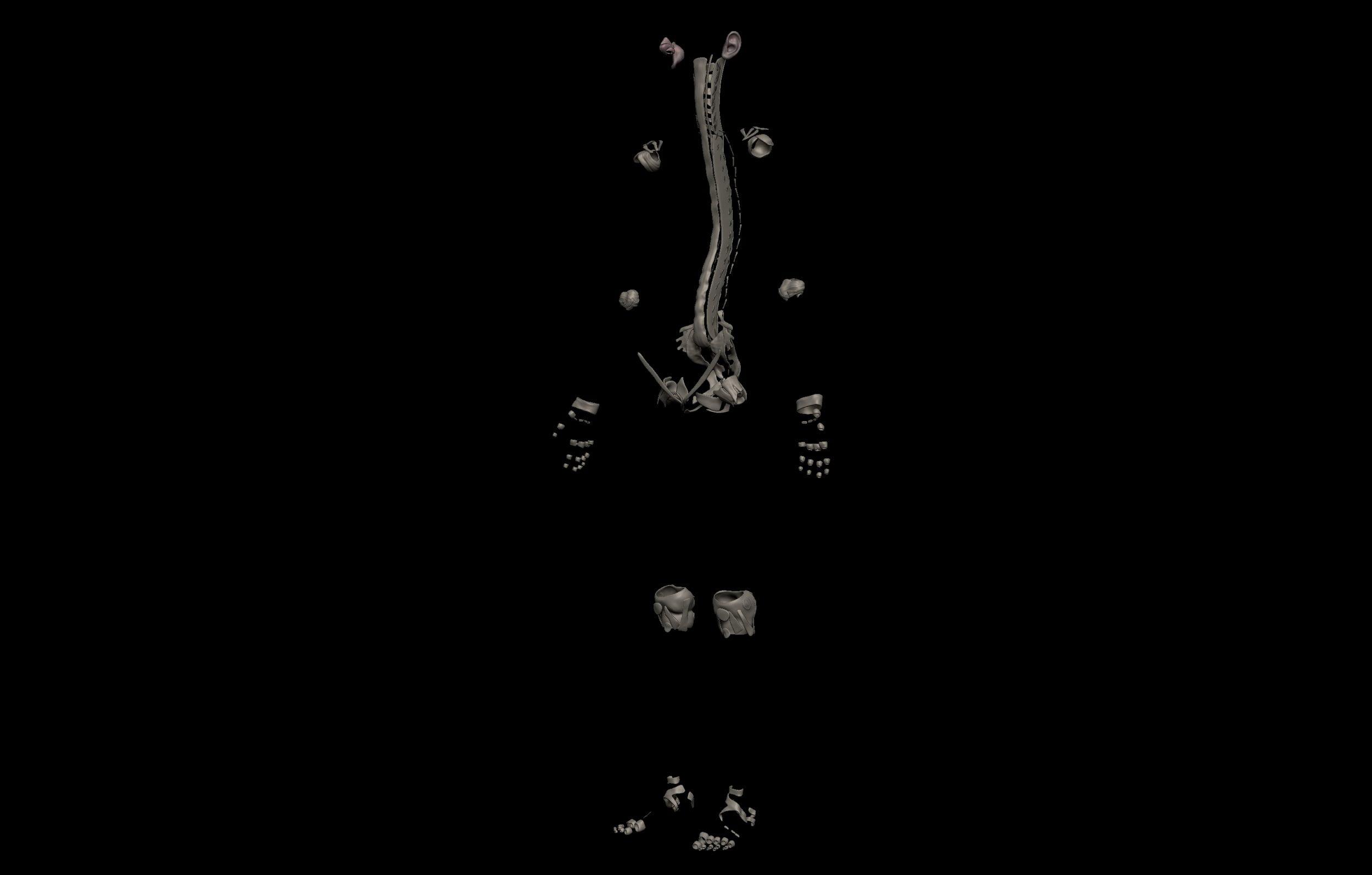 2 8 scaled SA Anatomy | Study Anatomy in 3D