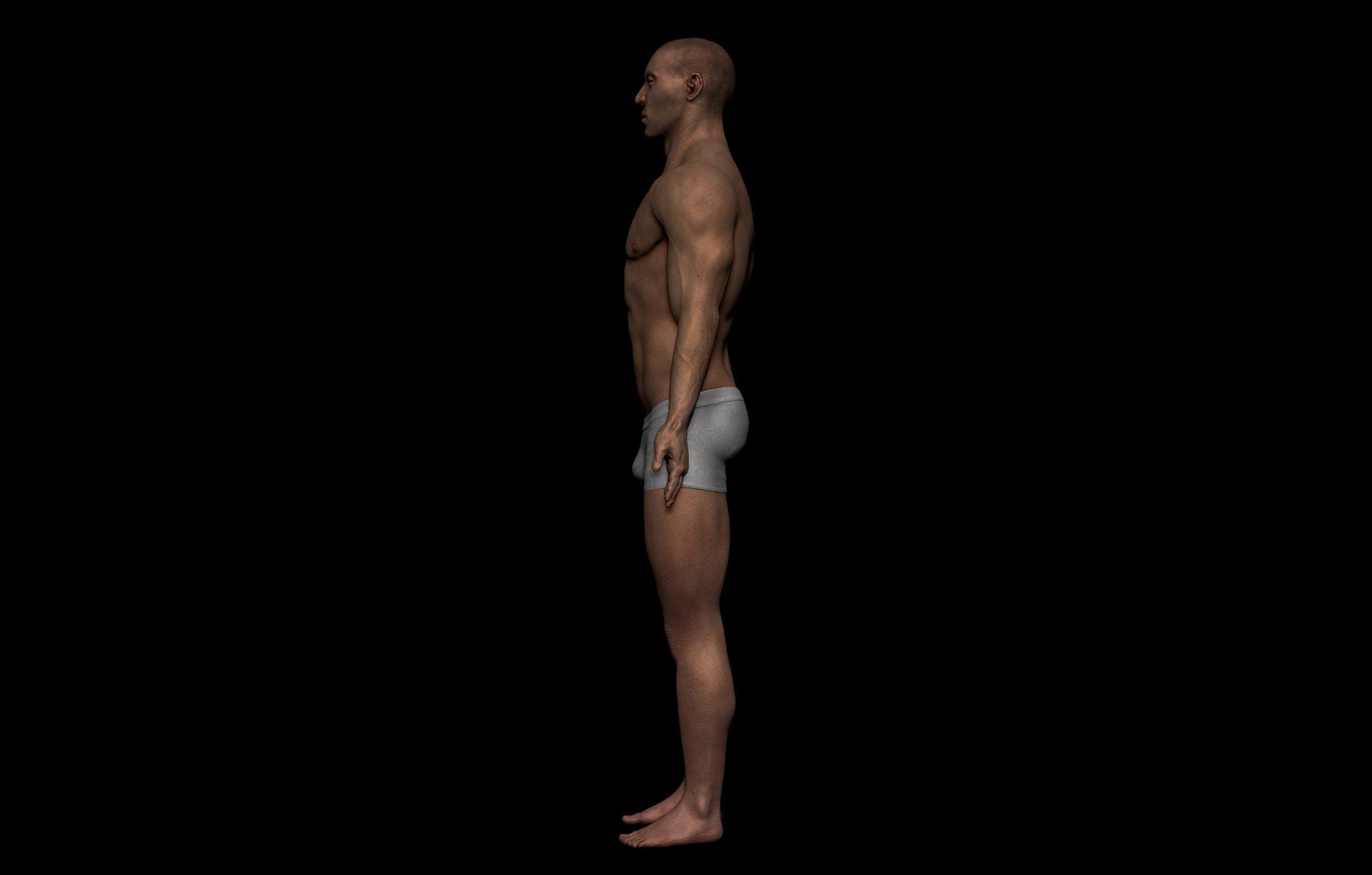 3 2 scaled SA Anatomy | Study Anatomy in 3D
