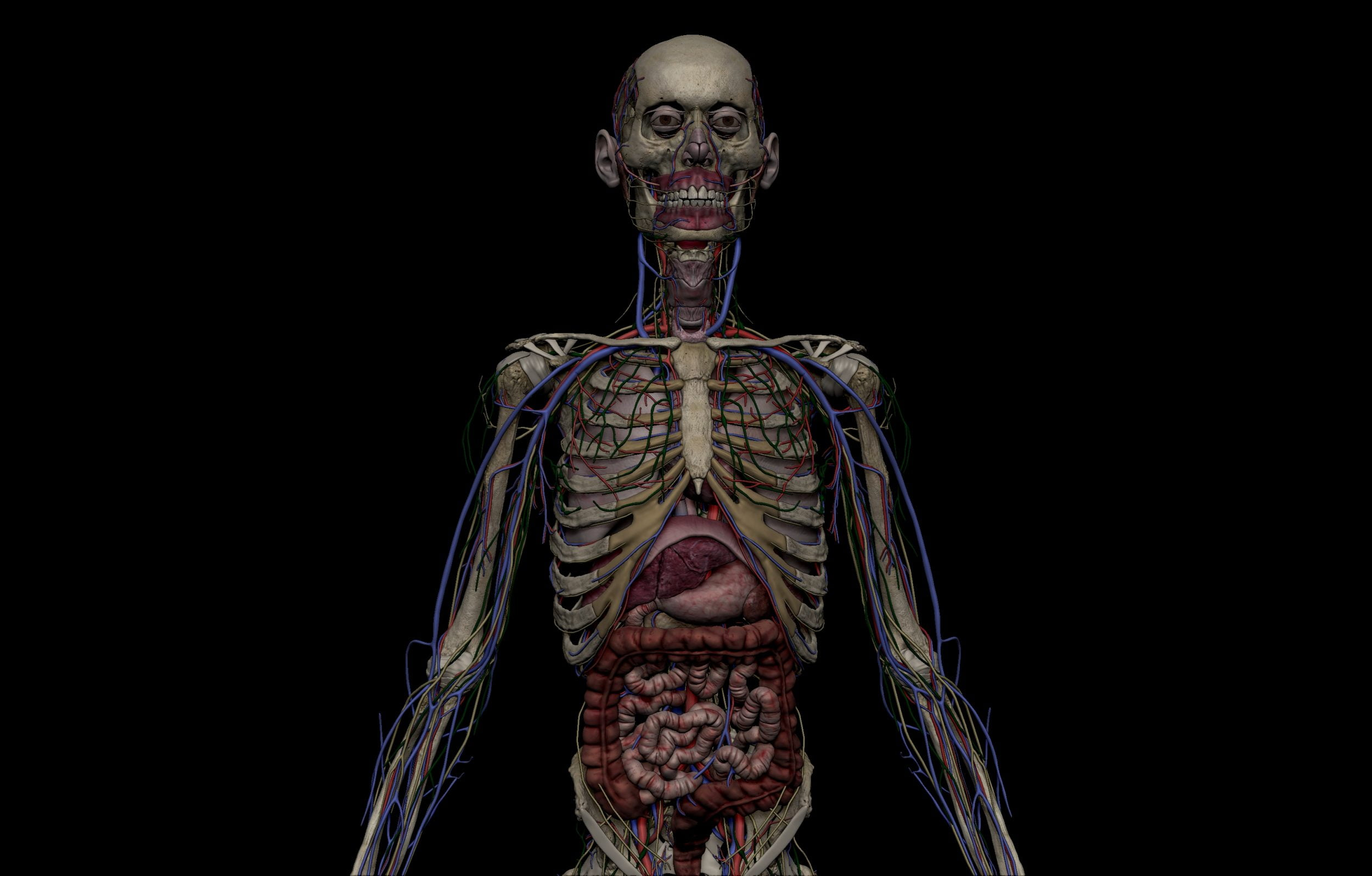 3 scaled SA Anatomy   Study Anatomy in 3D