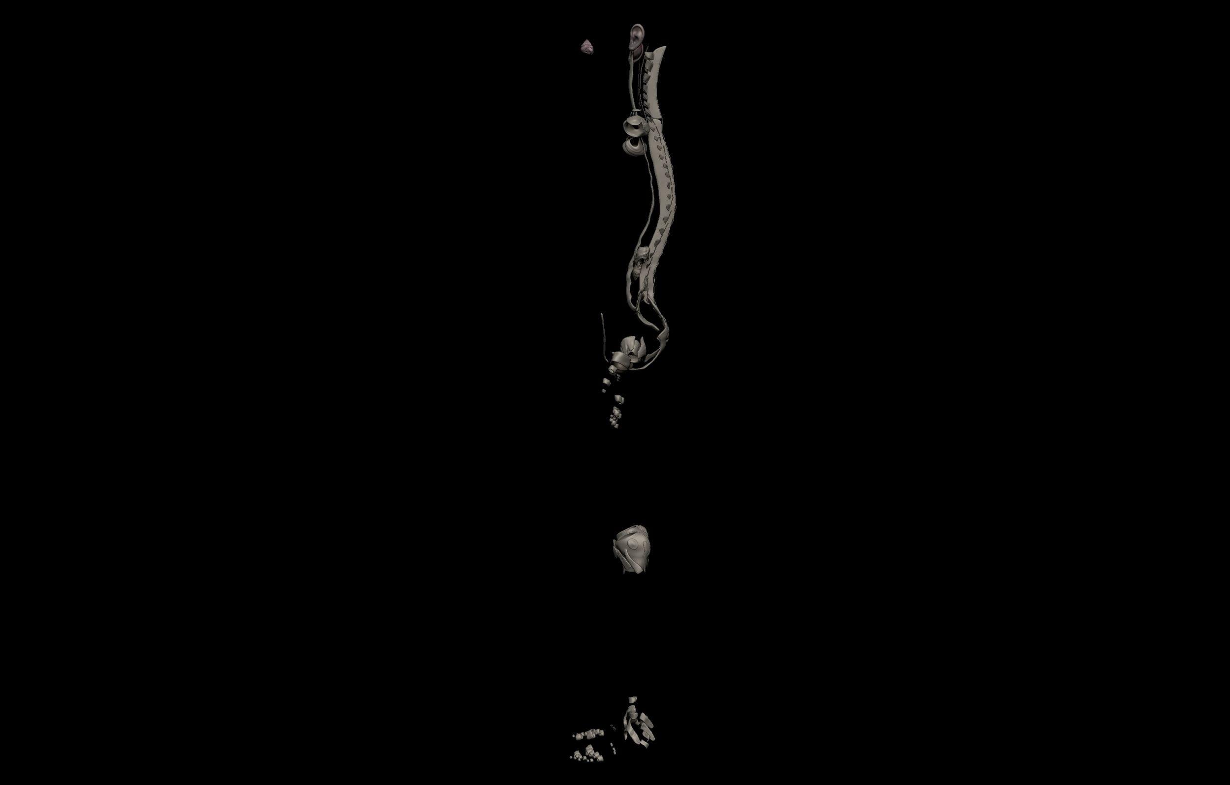 3 8 scaled SA Anatomy | Study Anatomy in 3D