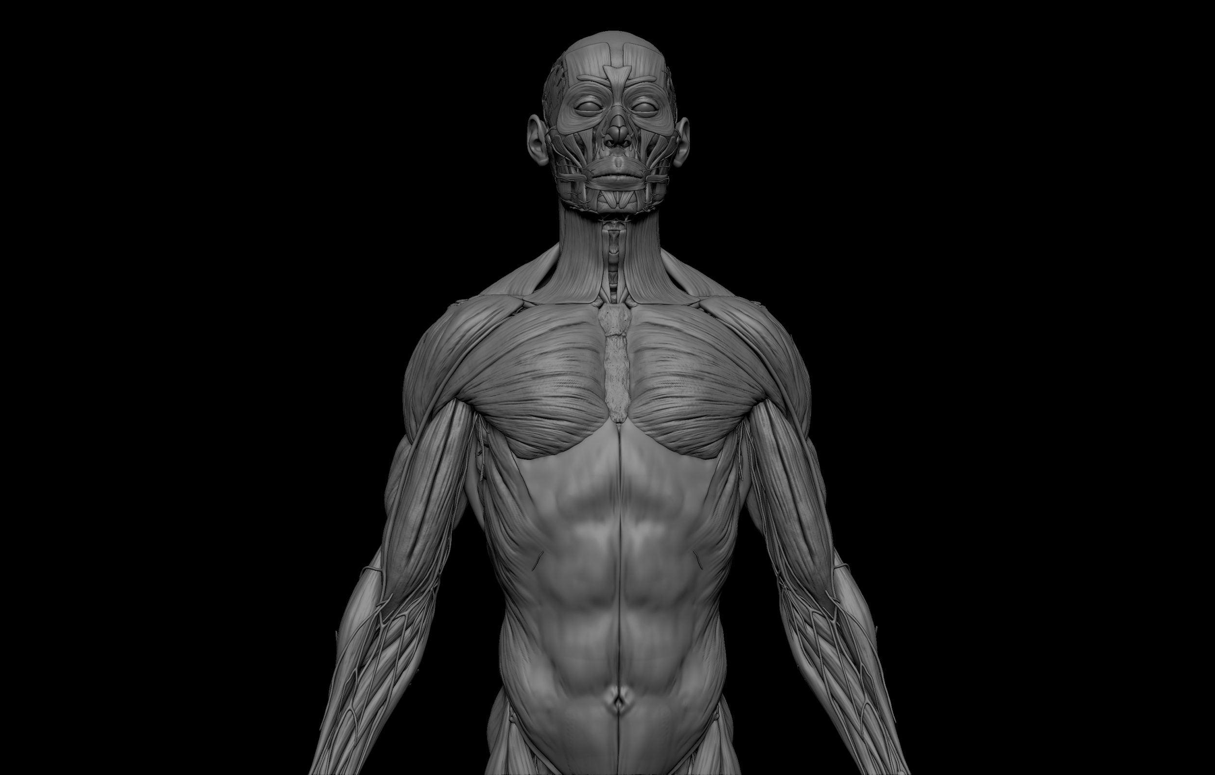 5 scaled SA Anatomy   Study Anatomy in 3D