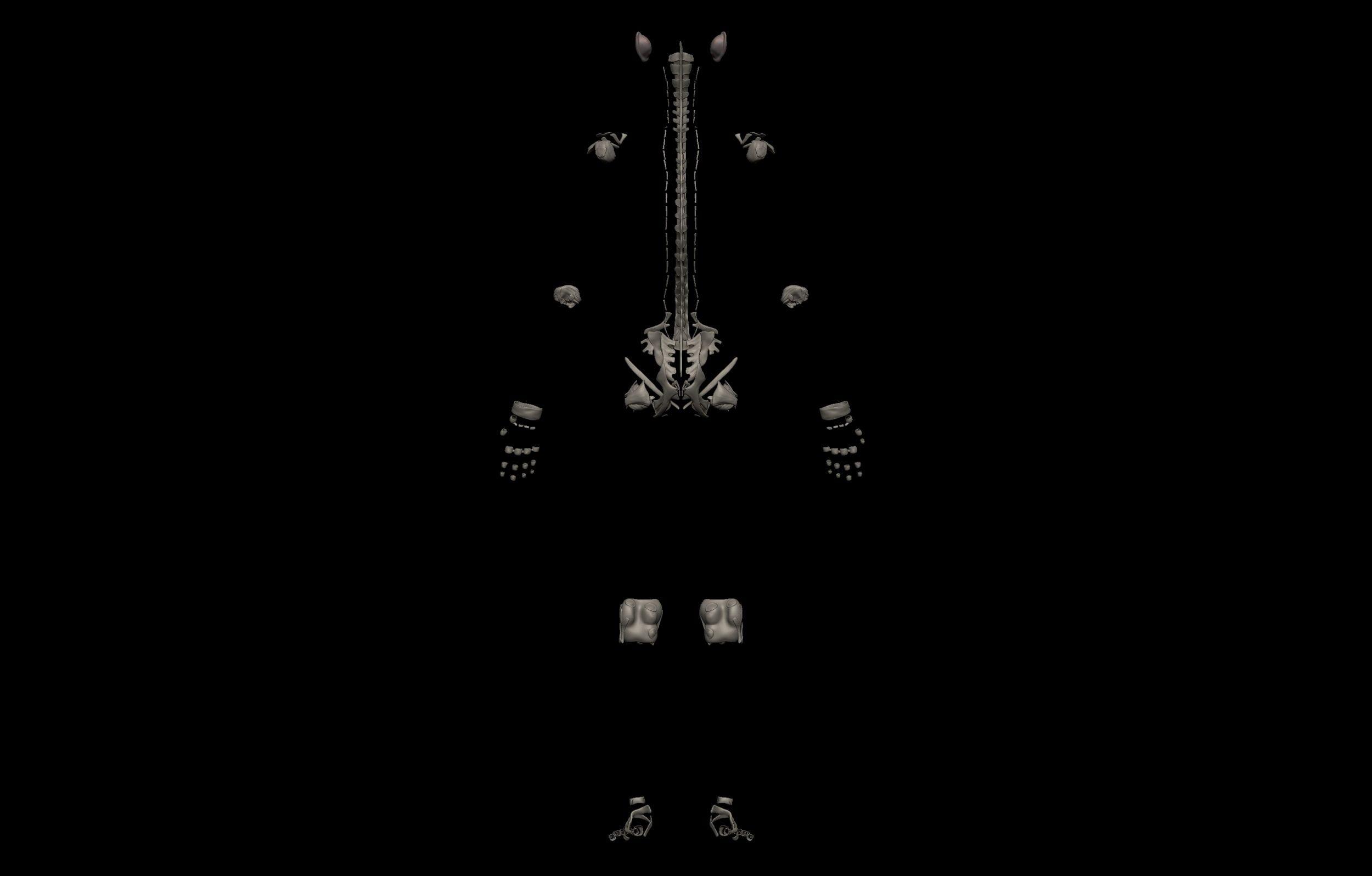 5 8 scaled SA Anatomy | Study Anatomy in 3D