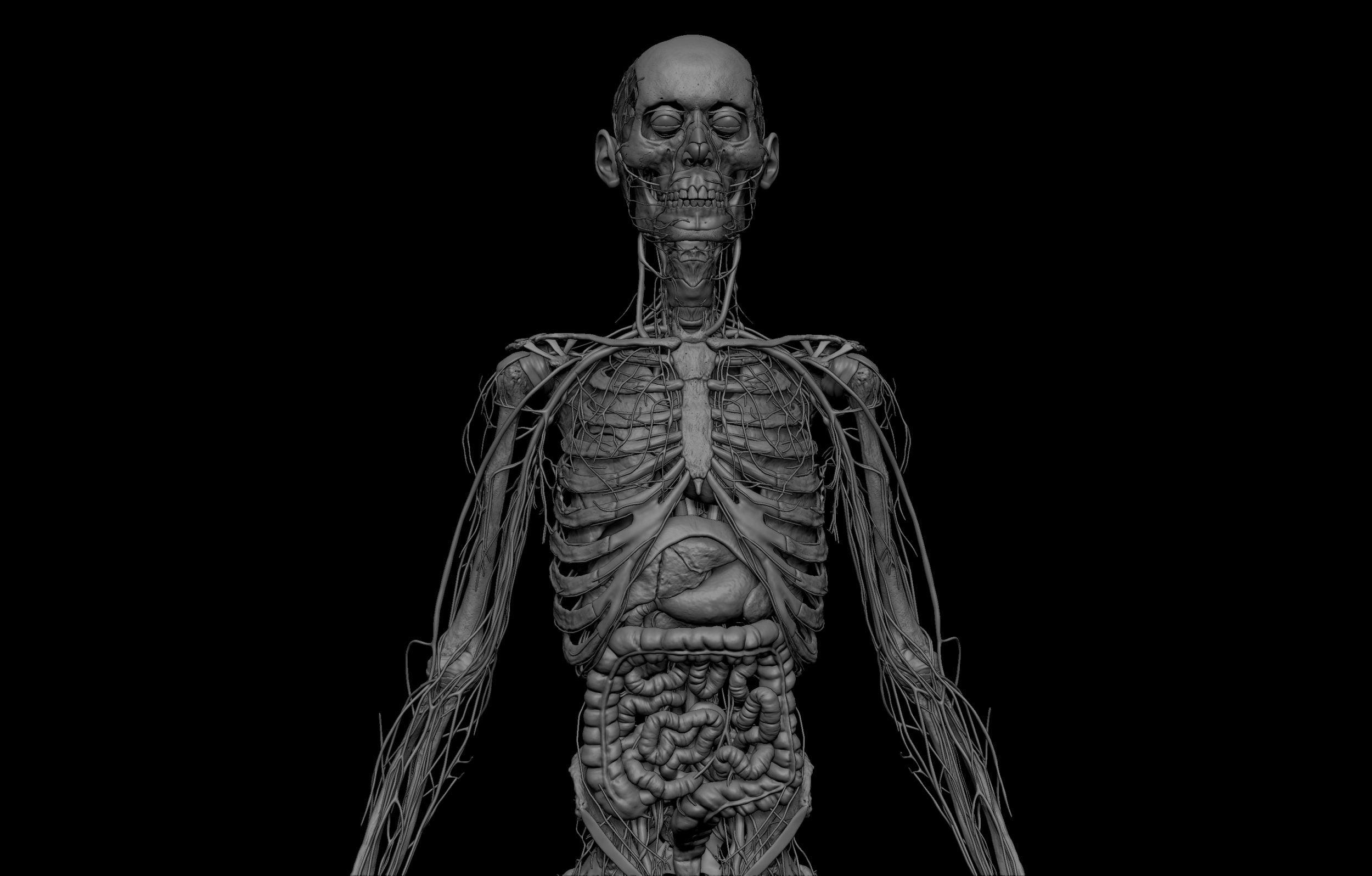 6 scaled SA Anatomy   Study Anatomy in 3D