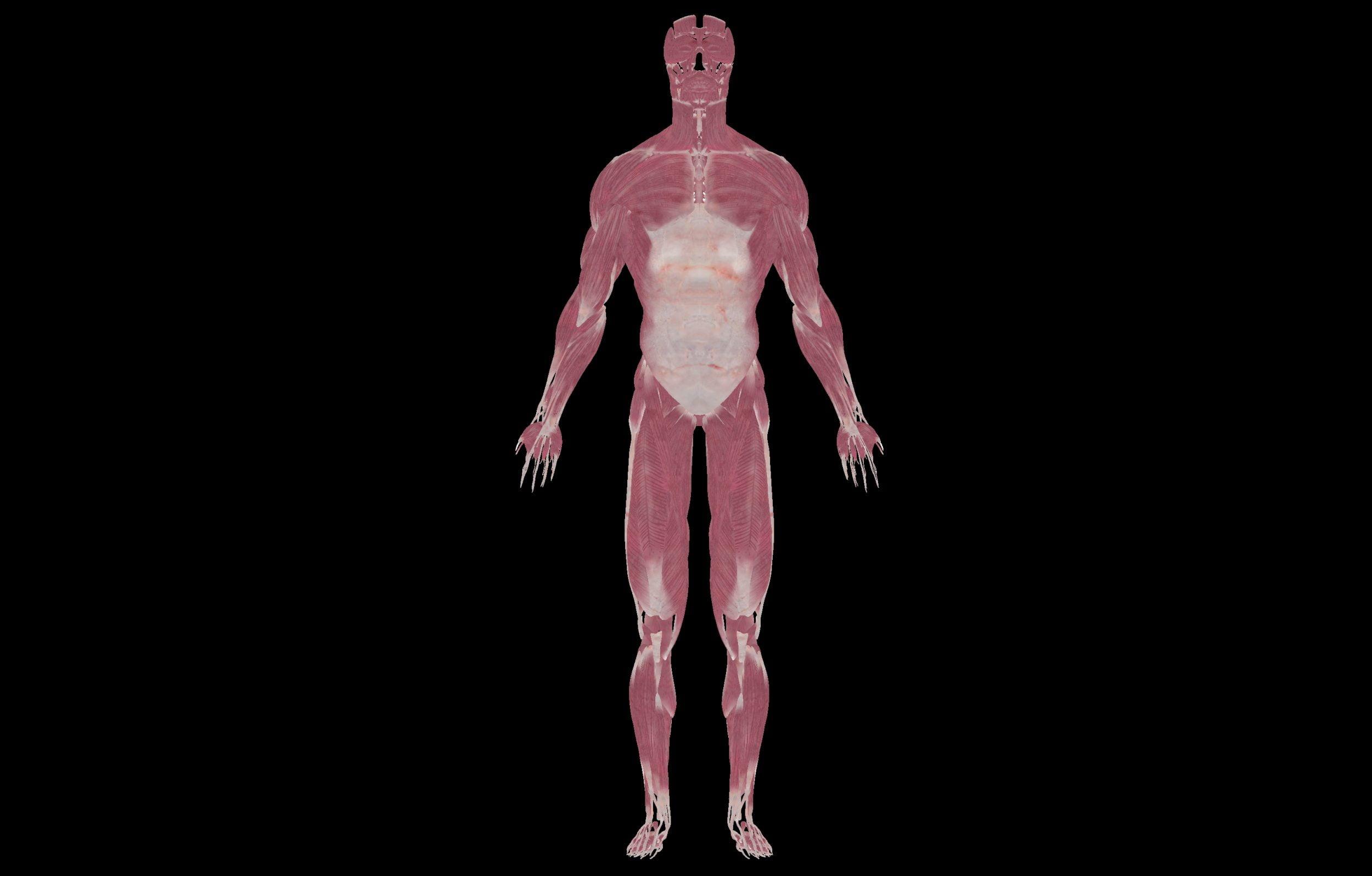6 3 scaled SA Anatomy   Study Anatomy in 3D