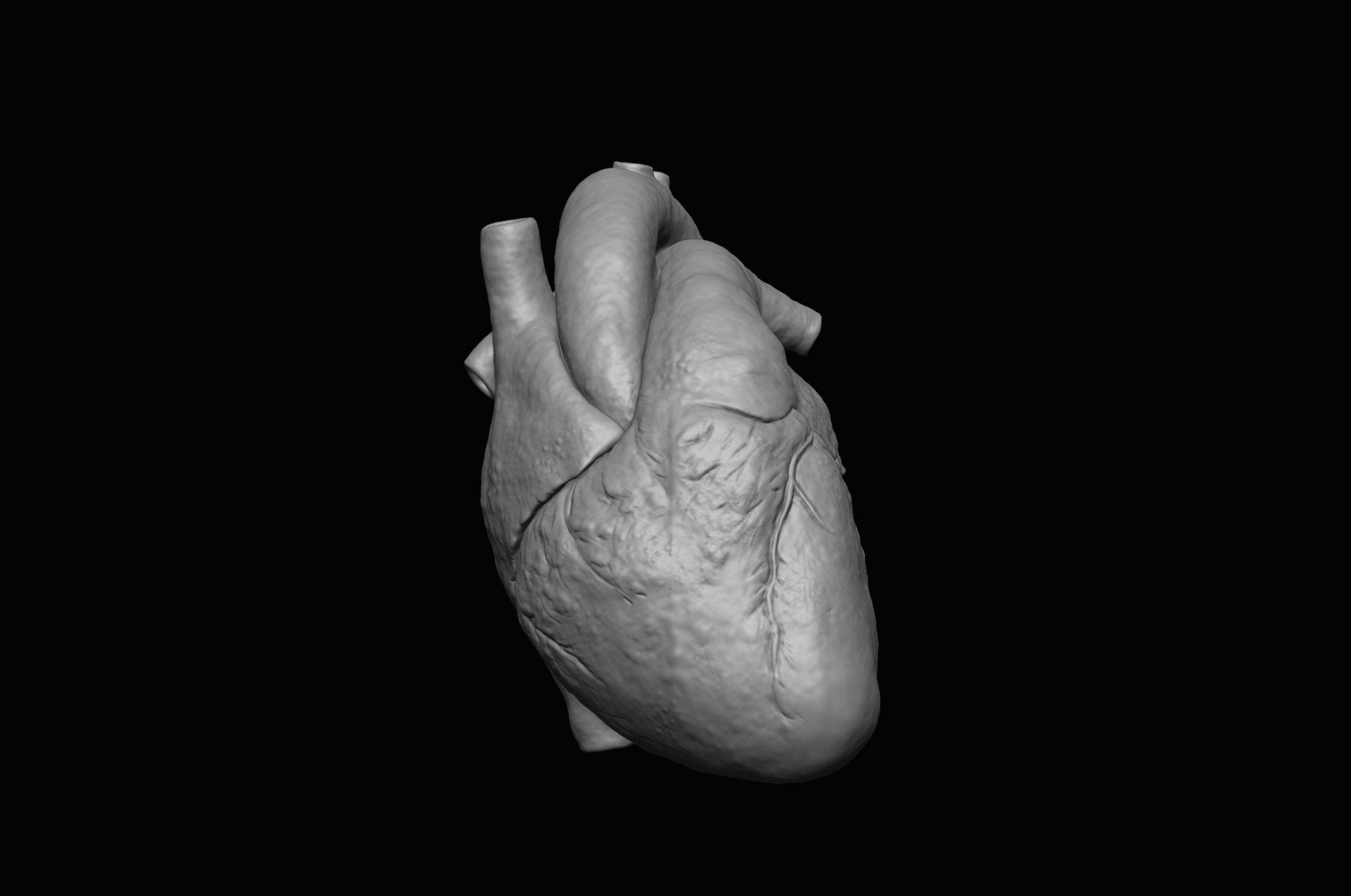 60 scaled SA Anatomy | Study Anatomy in 3D