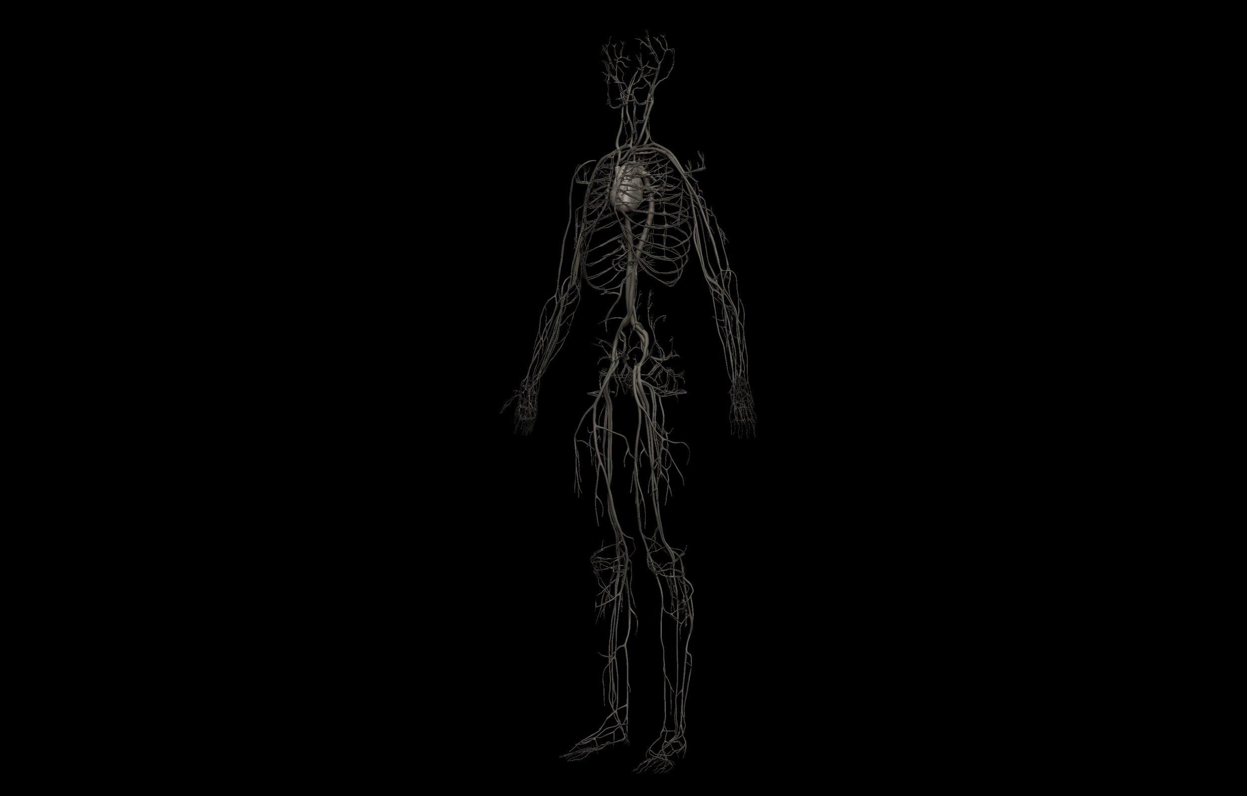 7 1 scaled SA Anatomy | Study Anatomy in 3D