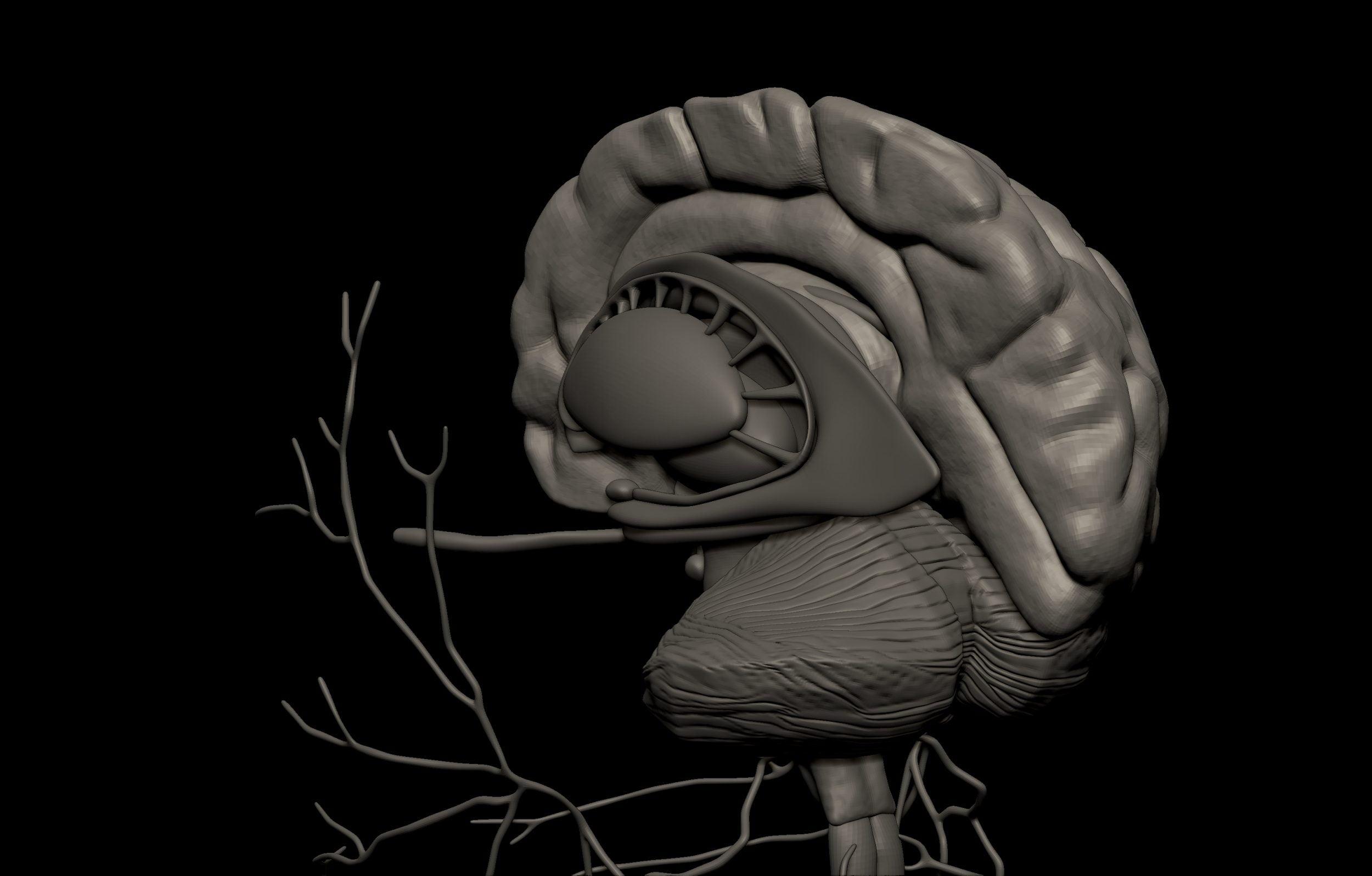 8 5 scaled SA Anatomy | Study Anatomy in 3D
