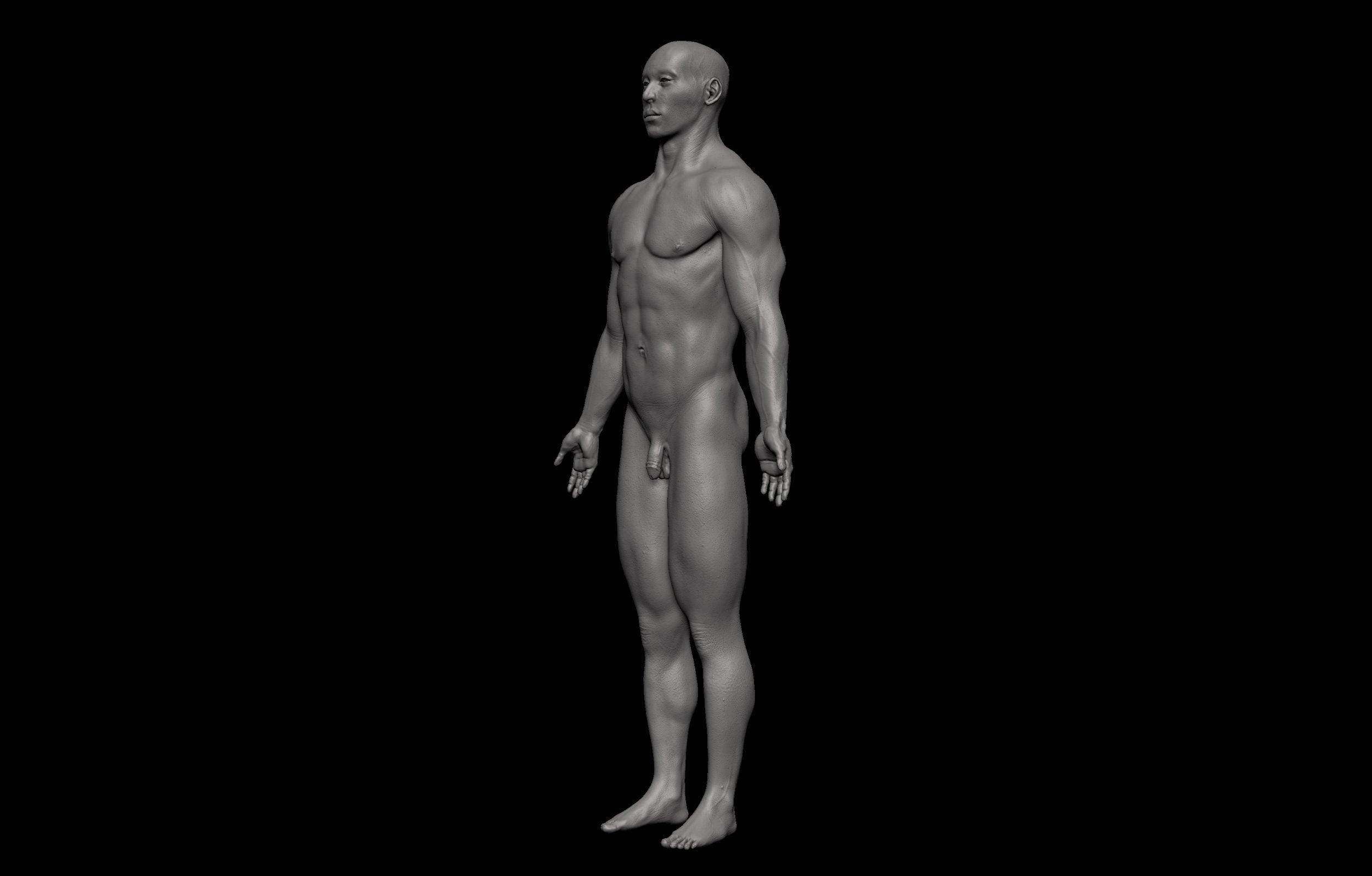 9 2 scaled SA Anatomy | Study Anatomy in 3D