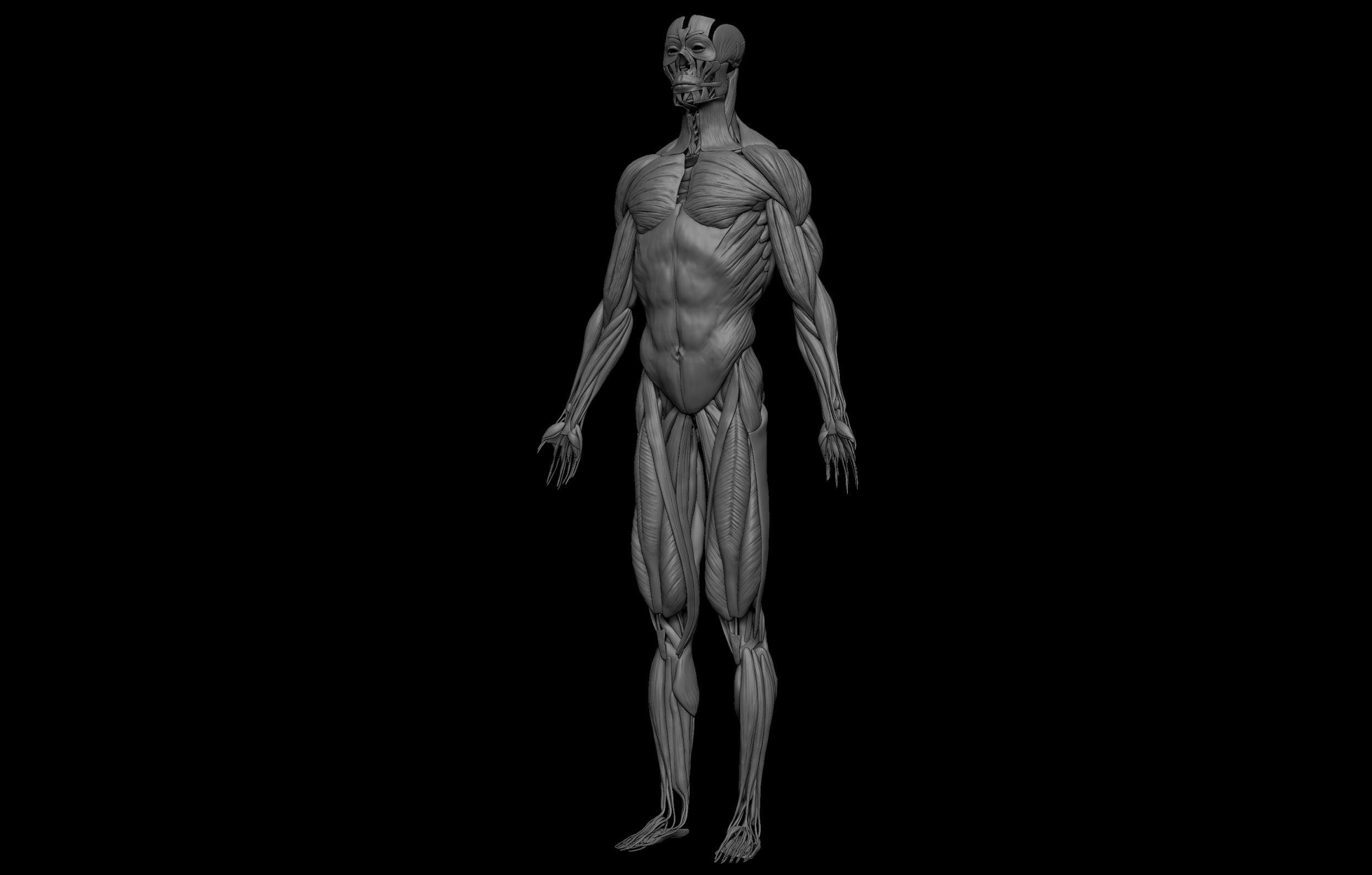 9 3 scaled SA Anatomy   Study Anatomy in 3D