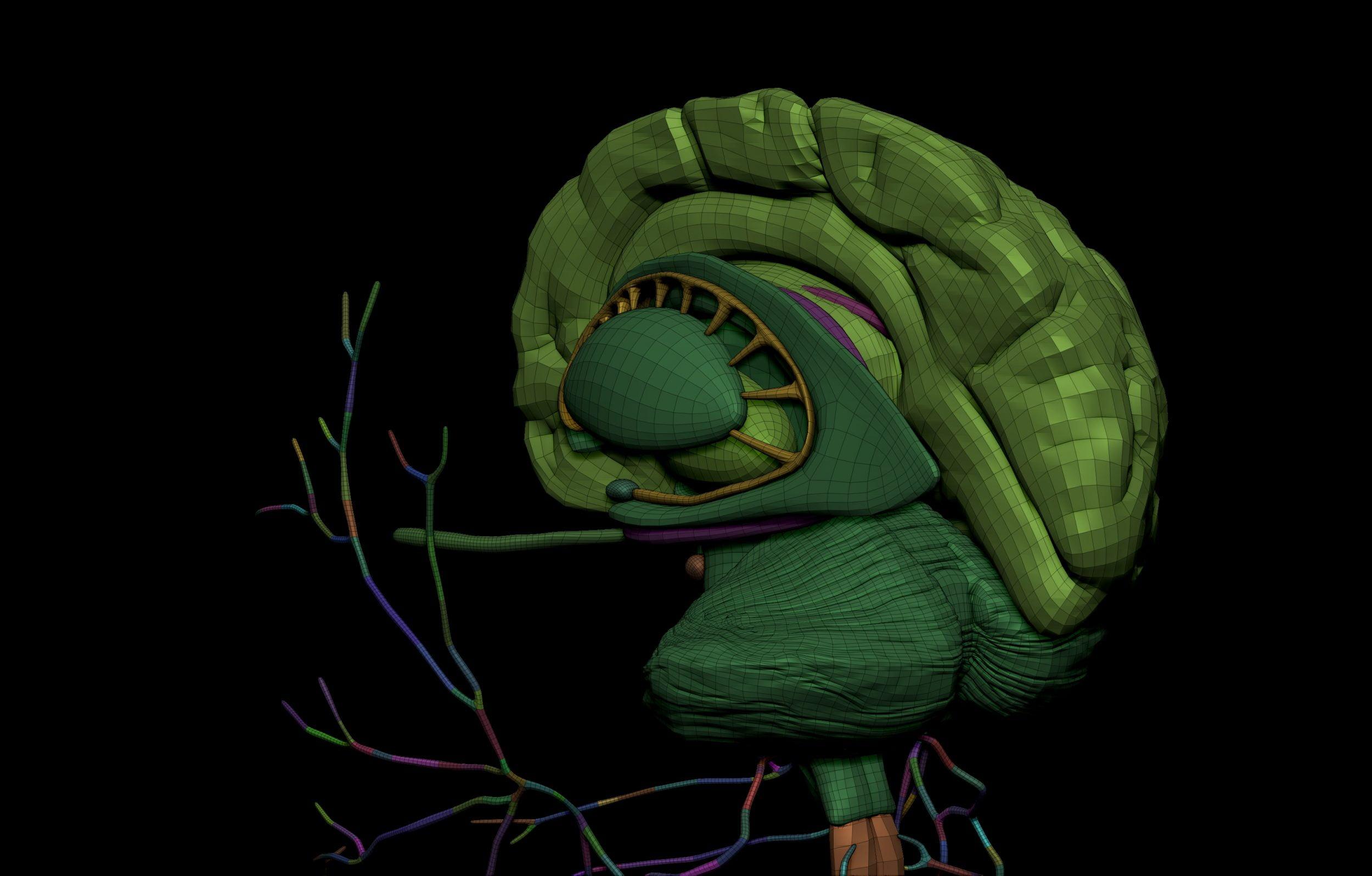 9 5 scaled SA Anatomy | Study Anatomy in 3D