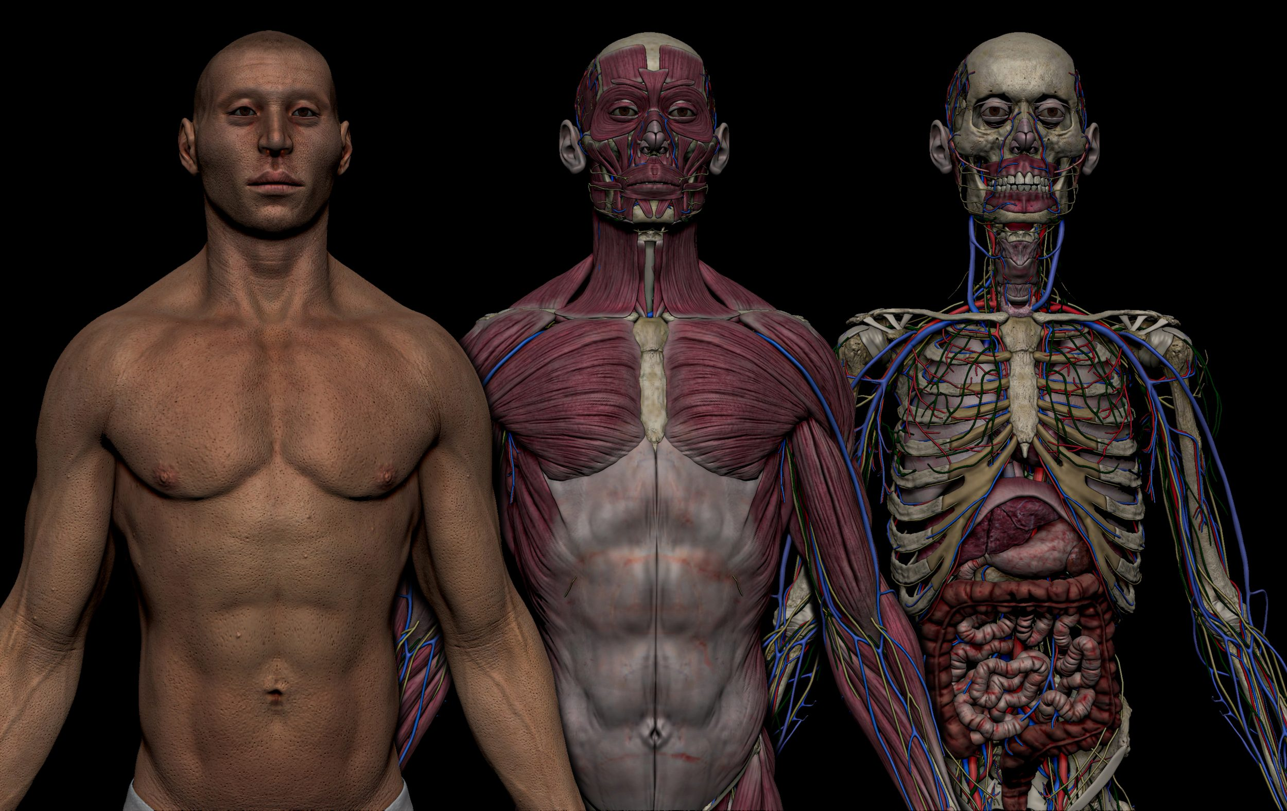preview images 1 scaled SA Anatomy   Study Anatomy in 3D
