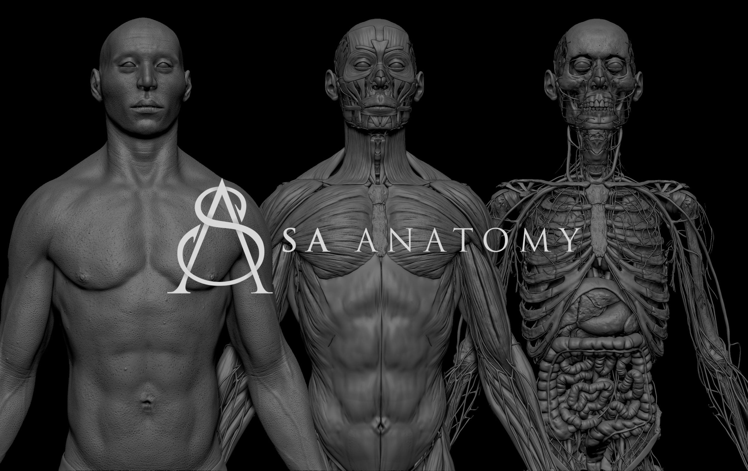 preview images 3 scaled SA Anatomy   Study Anatomy in 3D