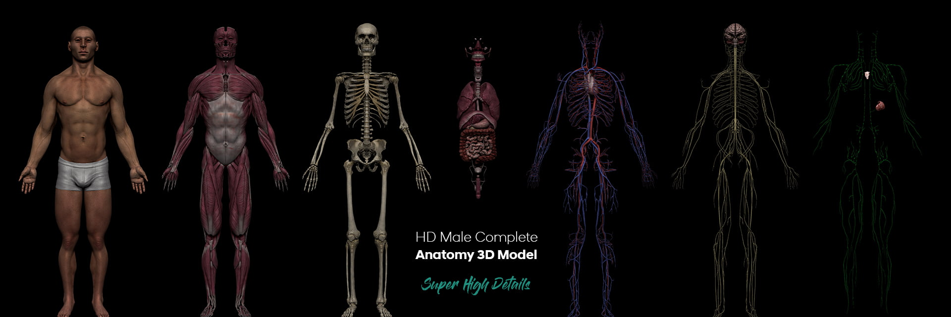 3D Anatomy Models