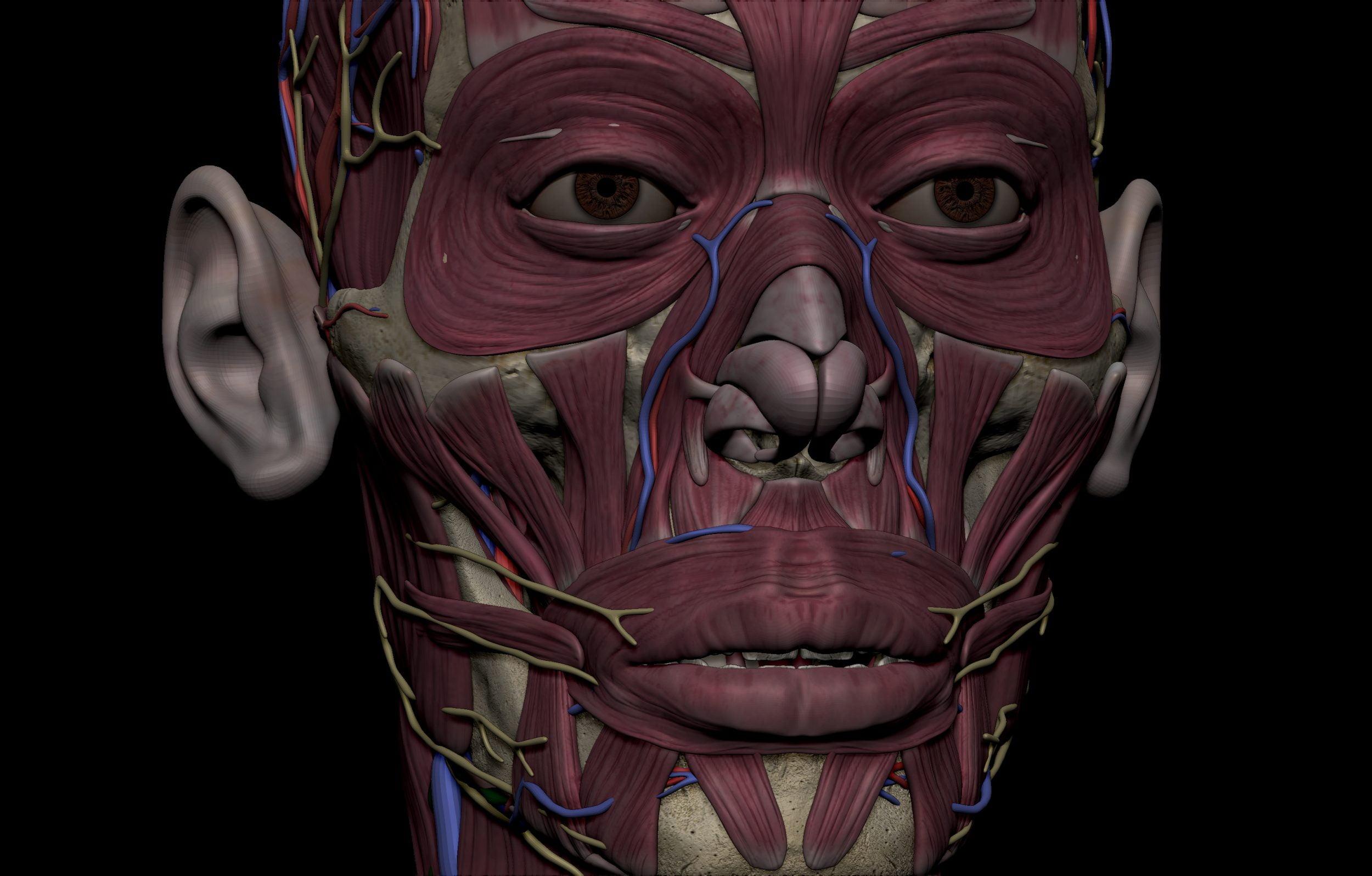 23 scaled SA Anatomy | Study Anatomy in 3D