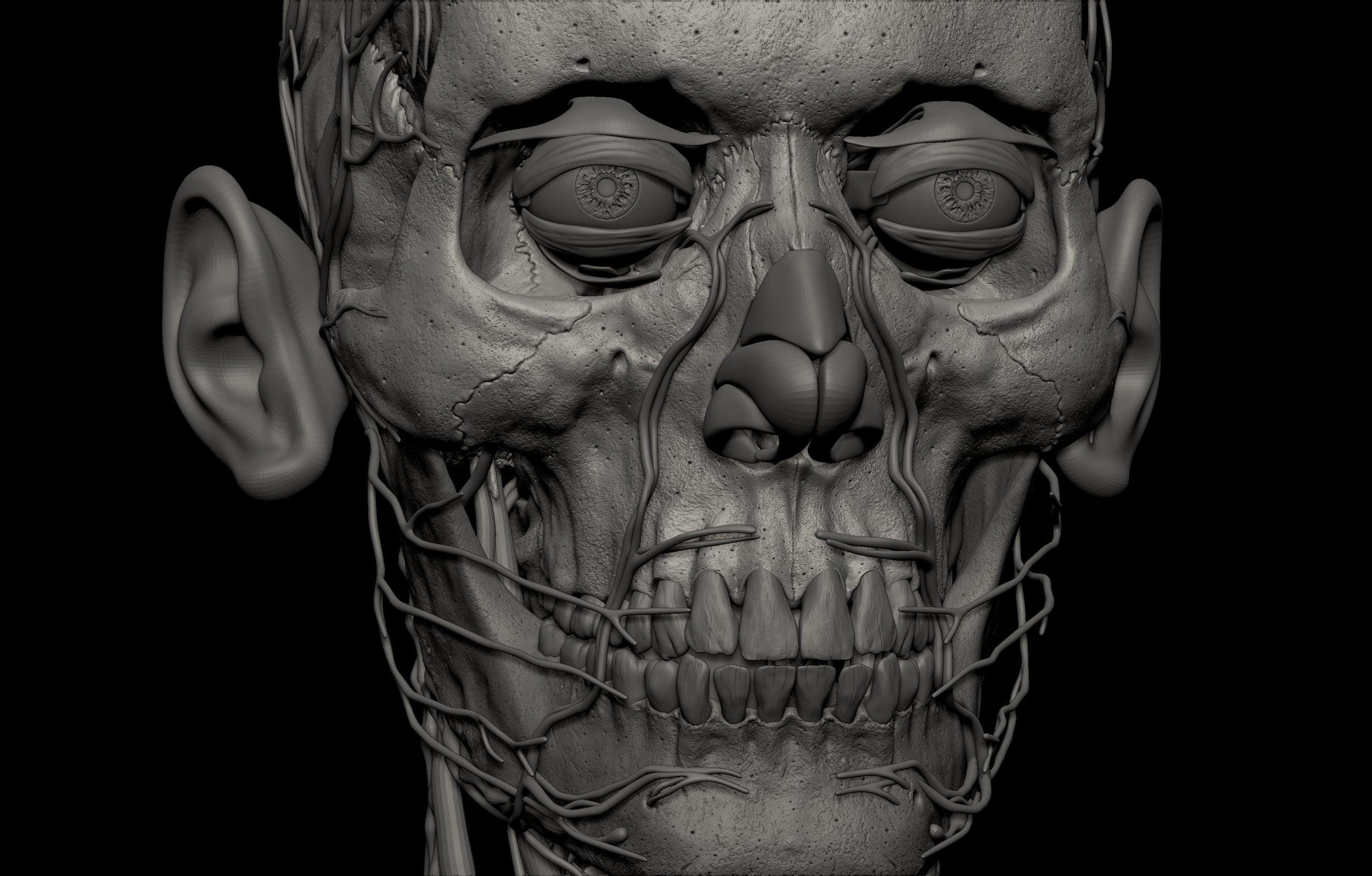 26 scaled SA Anatomy | Study Anatomy in 3D