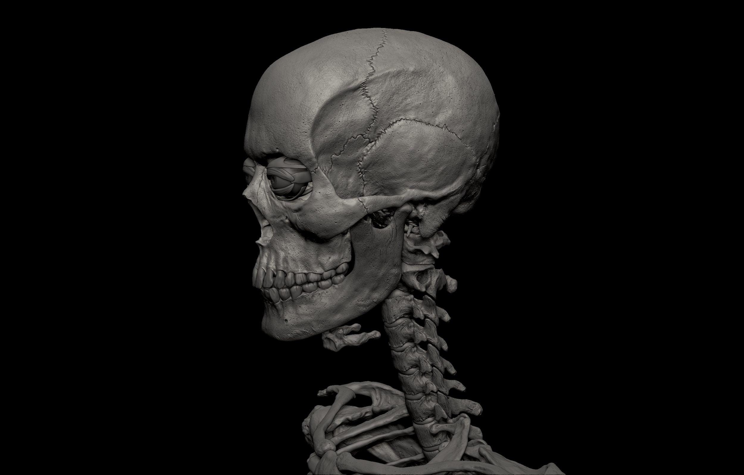 28 scaled SA Anatomy | Study Anatomy in 3D