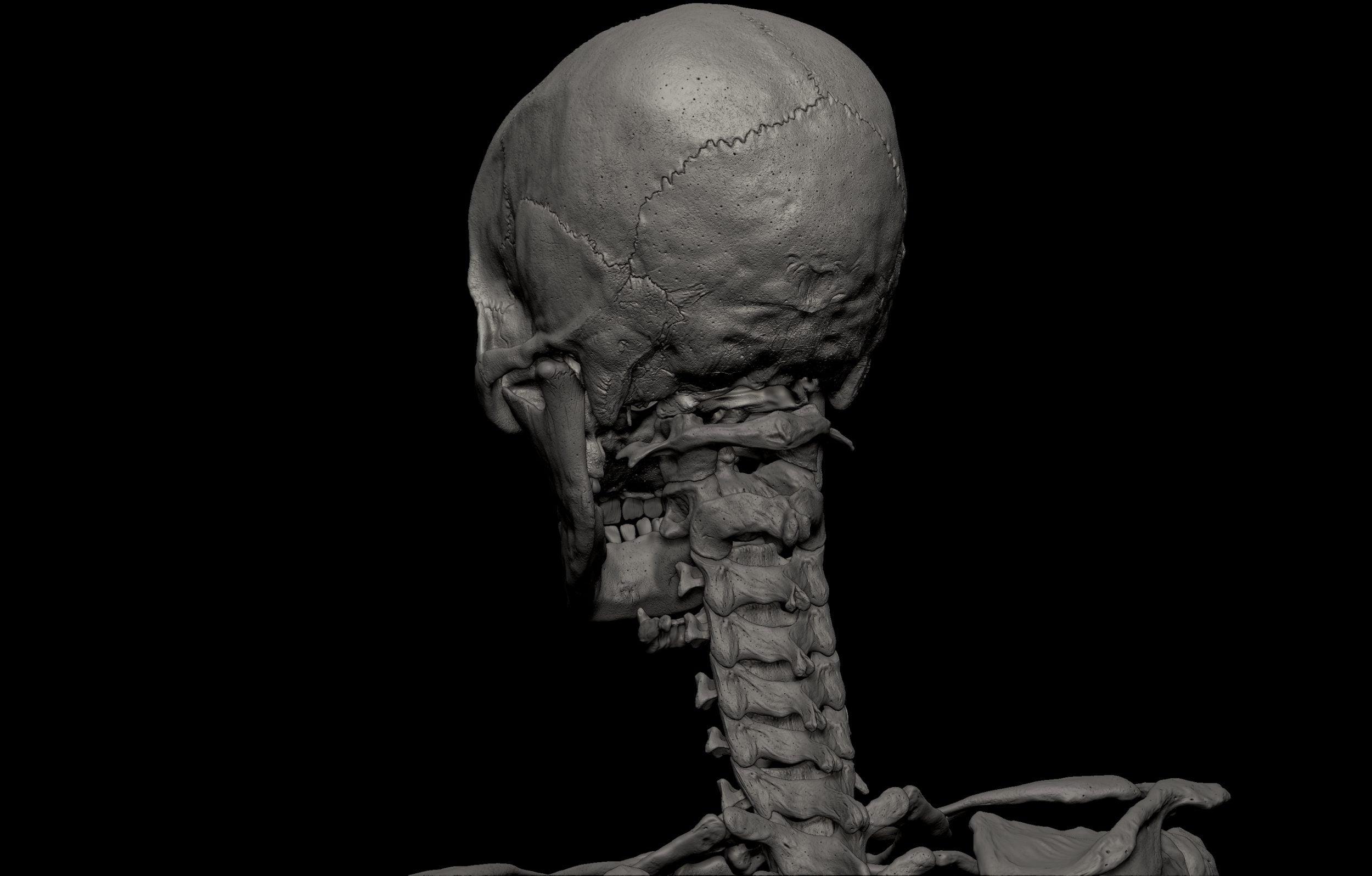 29 scaled SA Anatomy | Study Anatomy in 3D